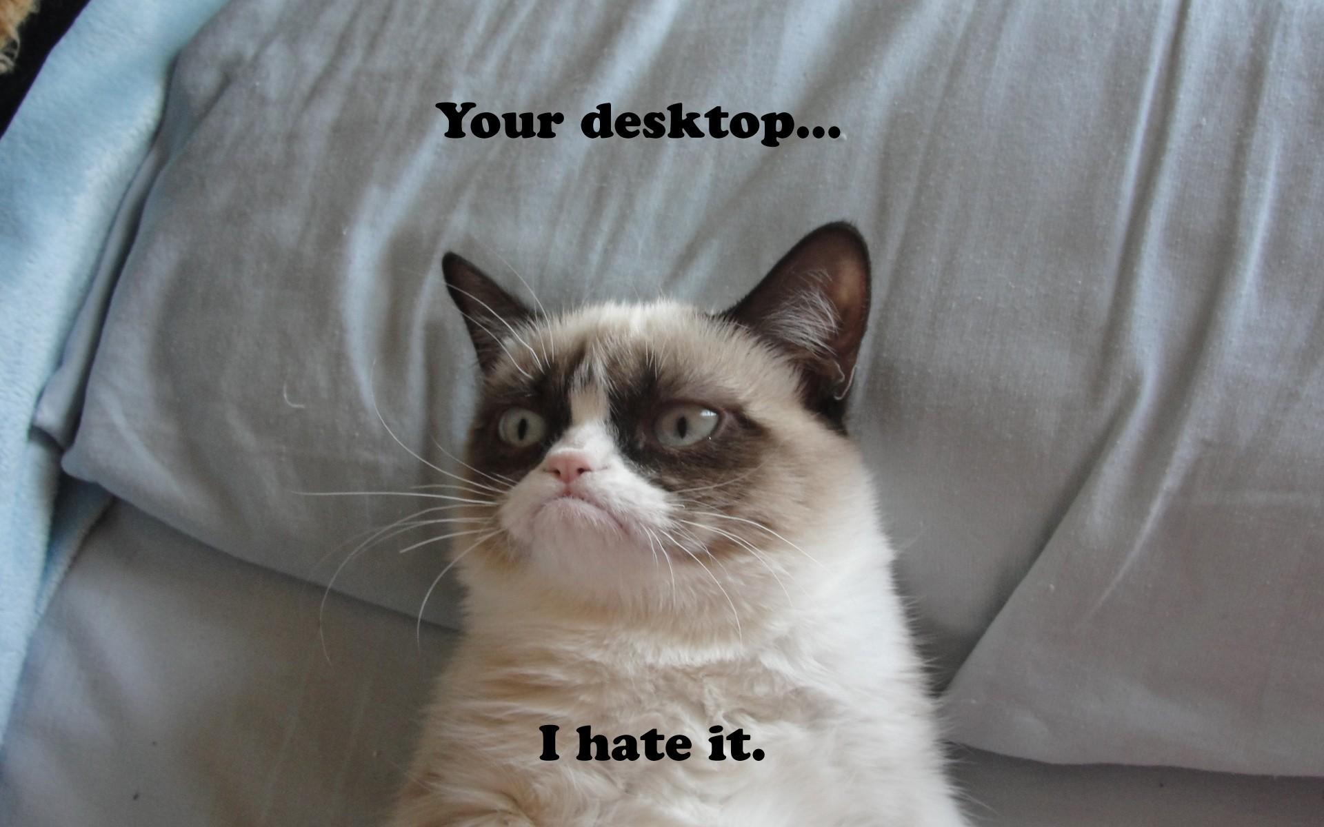 Res: 1920x1200, Grumpy Cat Meme Pictures humor funny cats wallpaper |  | 98021 |  WallpaperUP
