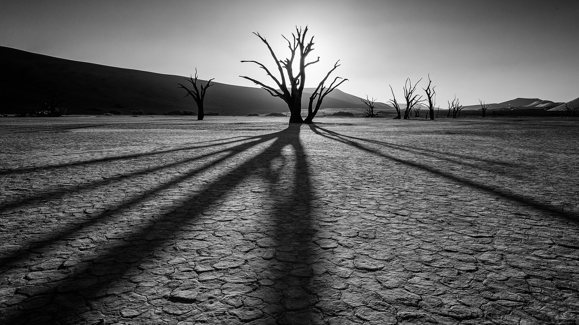 Res: 1920x1080, Black and White, Sky, Atmosphere, Woody Plant, Oasis HD Wallpaper, Nature  Picture, Background and Image