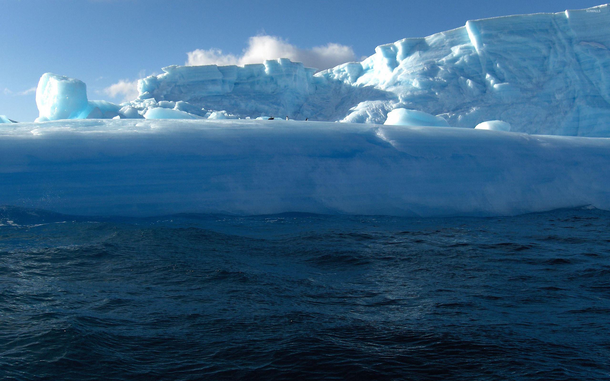 Res: 2560x1600, Penguins on glacier wallpaper