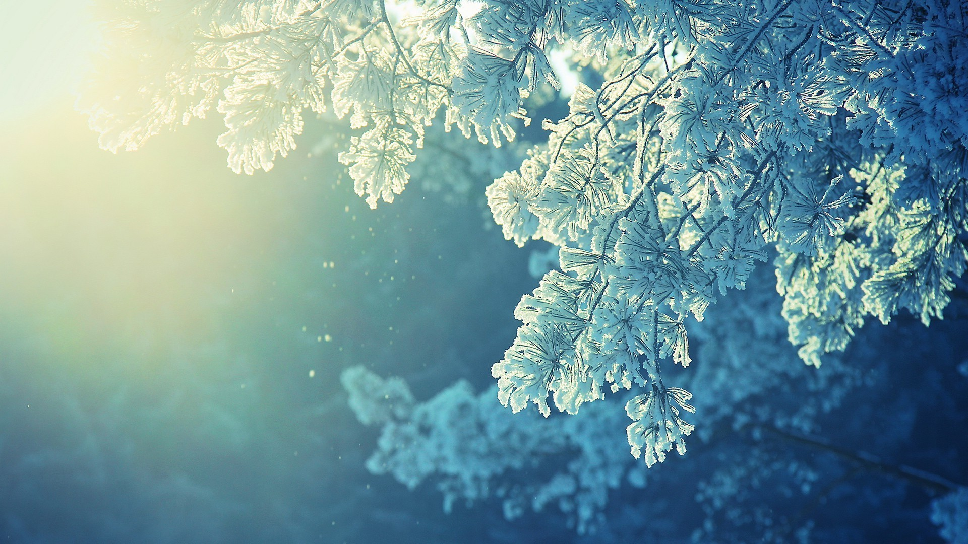 Res: 1920x1080, anime, Nature, Snow, Winter, Cold, Sunlight, Peaceful Wallpapers HD /  Desktop and Mobile Backgrounds