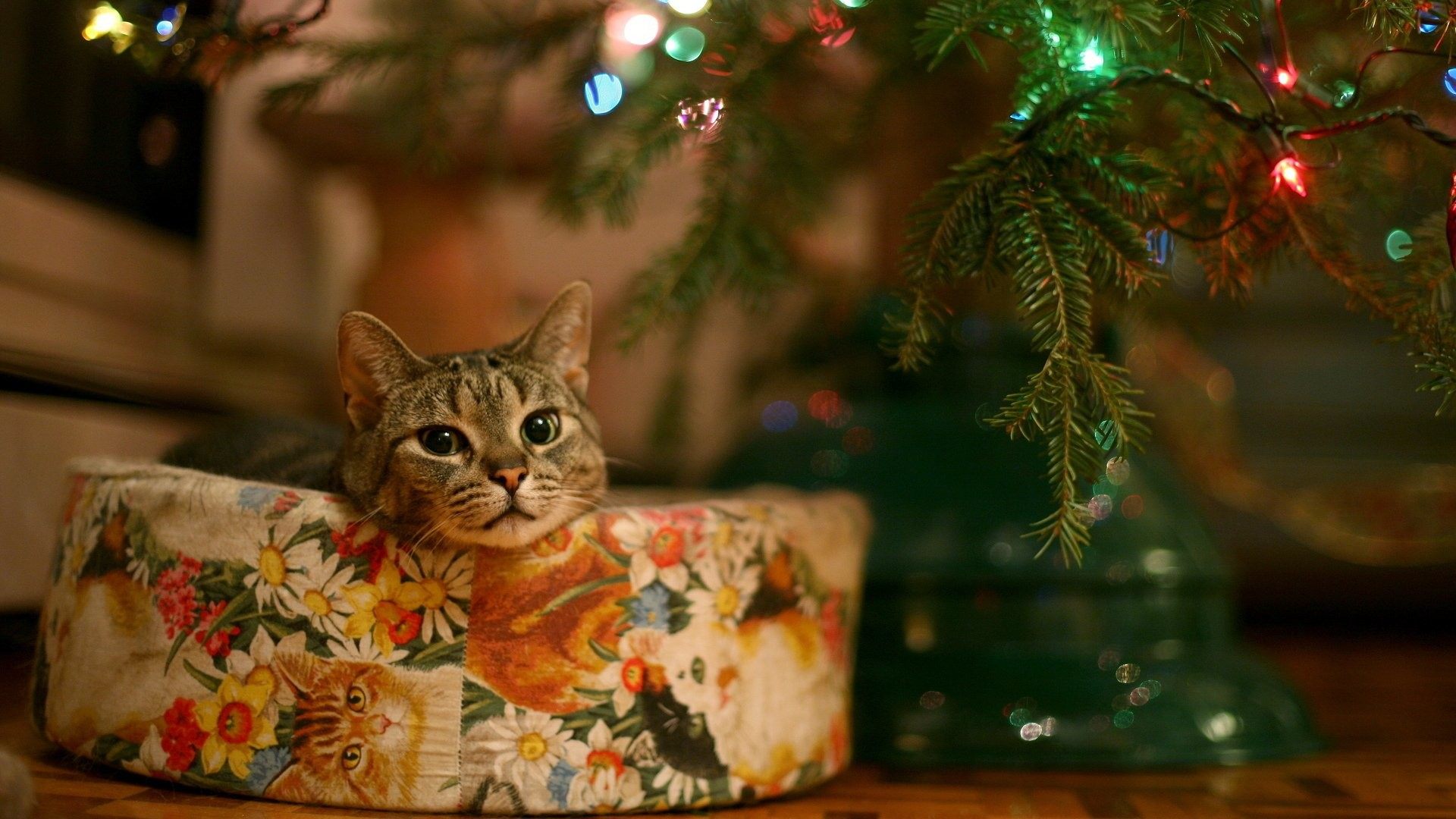 Res: 1920x1080, HD Wallpaper | Background Image ID:93669.  Holiday Christmas