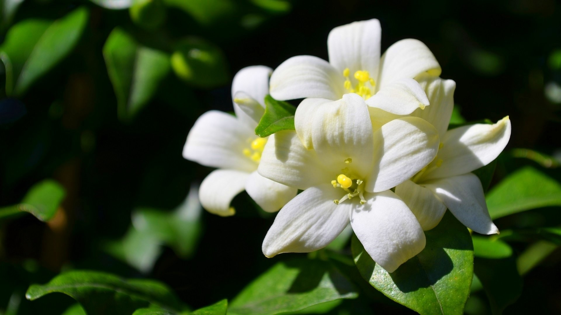 Res: 1920x1080, HD Wallpaper | Background Image ID:553611.  Earth Jasmine