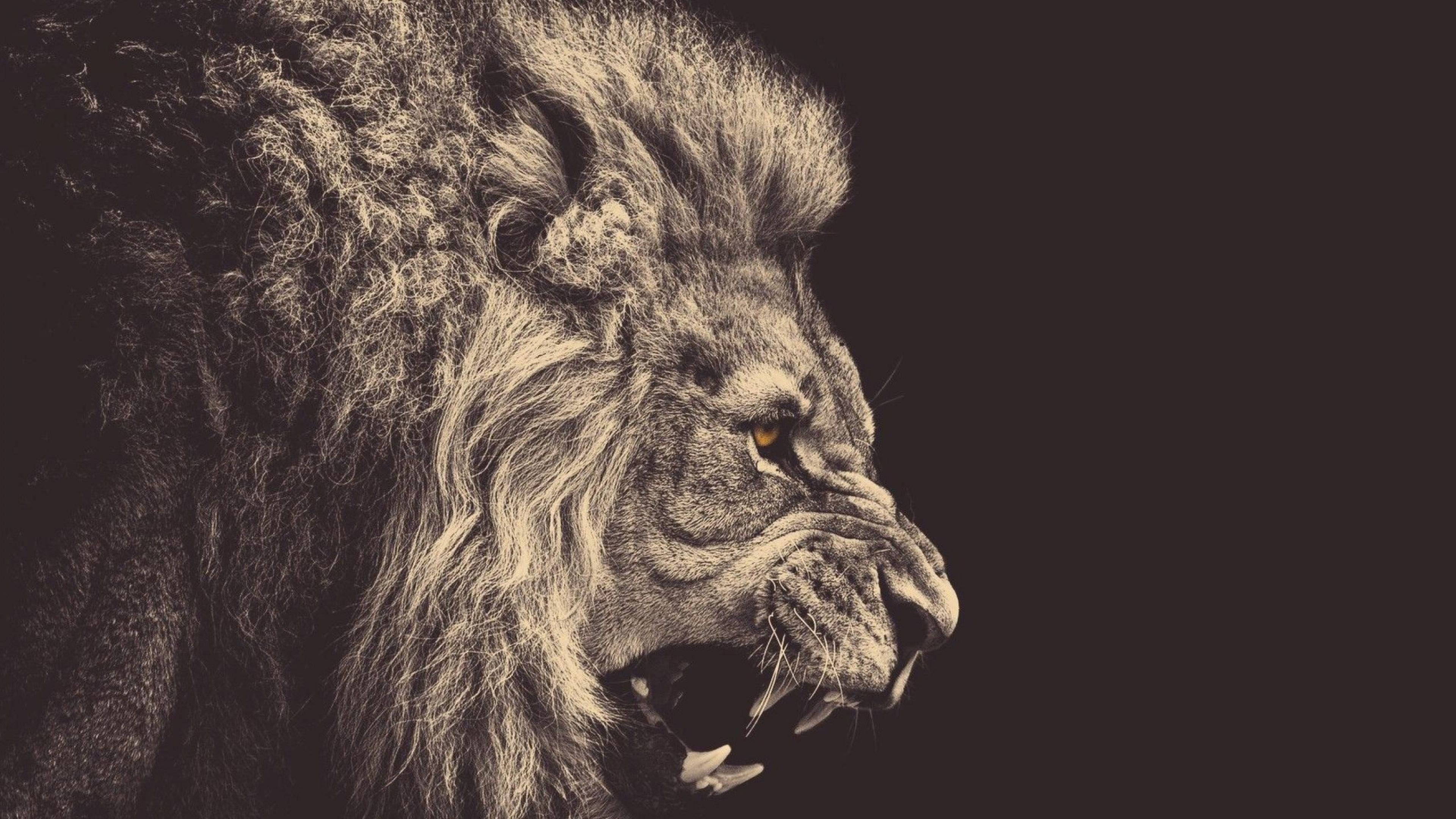 Res: 3840x2160, 4K Ultra HD Lion Wallpapers HD, Desktop Backgrounds