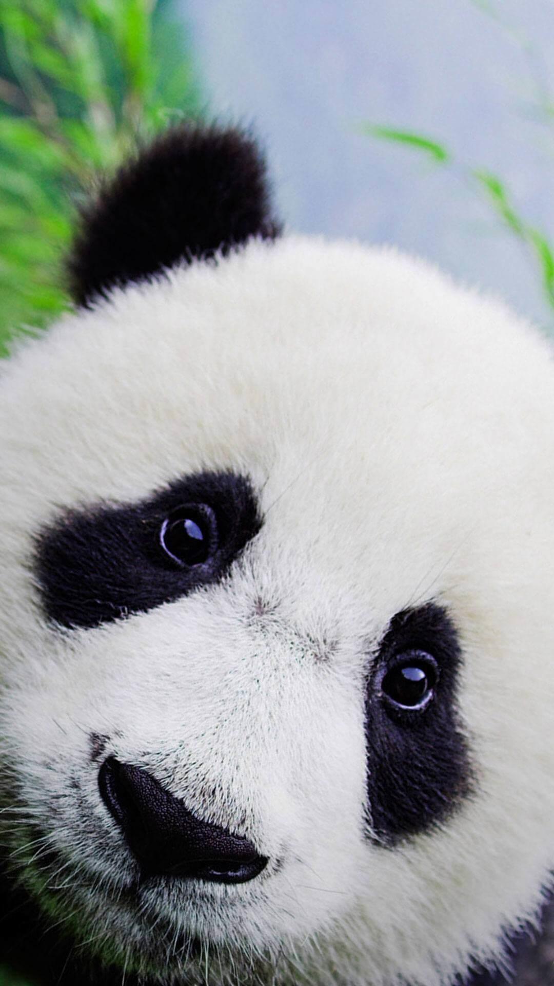 Res: 1080x1920, Cute Baby Panda Wallpaper For iPhone HD