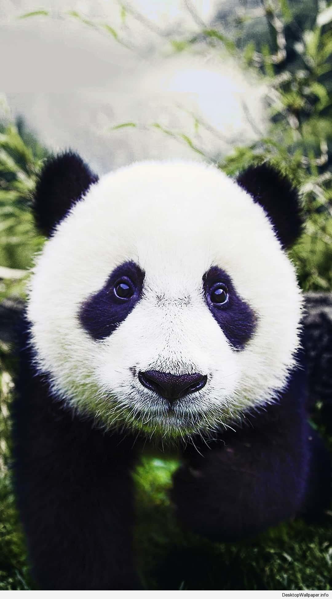 Res: 1080x1948, panda wallpaper phone