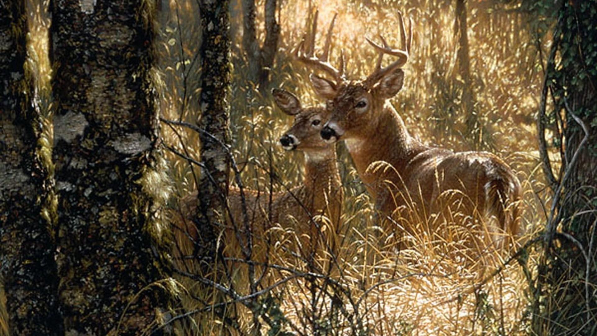 Res: 1920x1080, Deer Deers Forest Doe Buck Deer Fawn Nature Animals Wildlife .