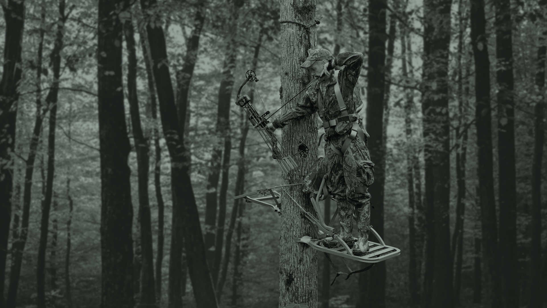 Res: 1920x1080, Collection of Bowhunter Wallpaper on HDWallpapers