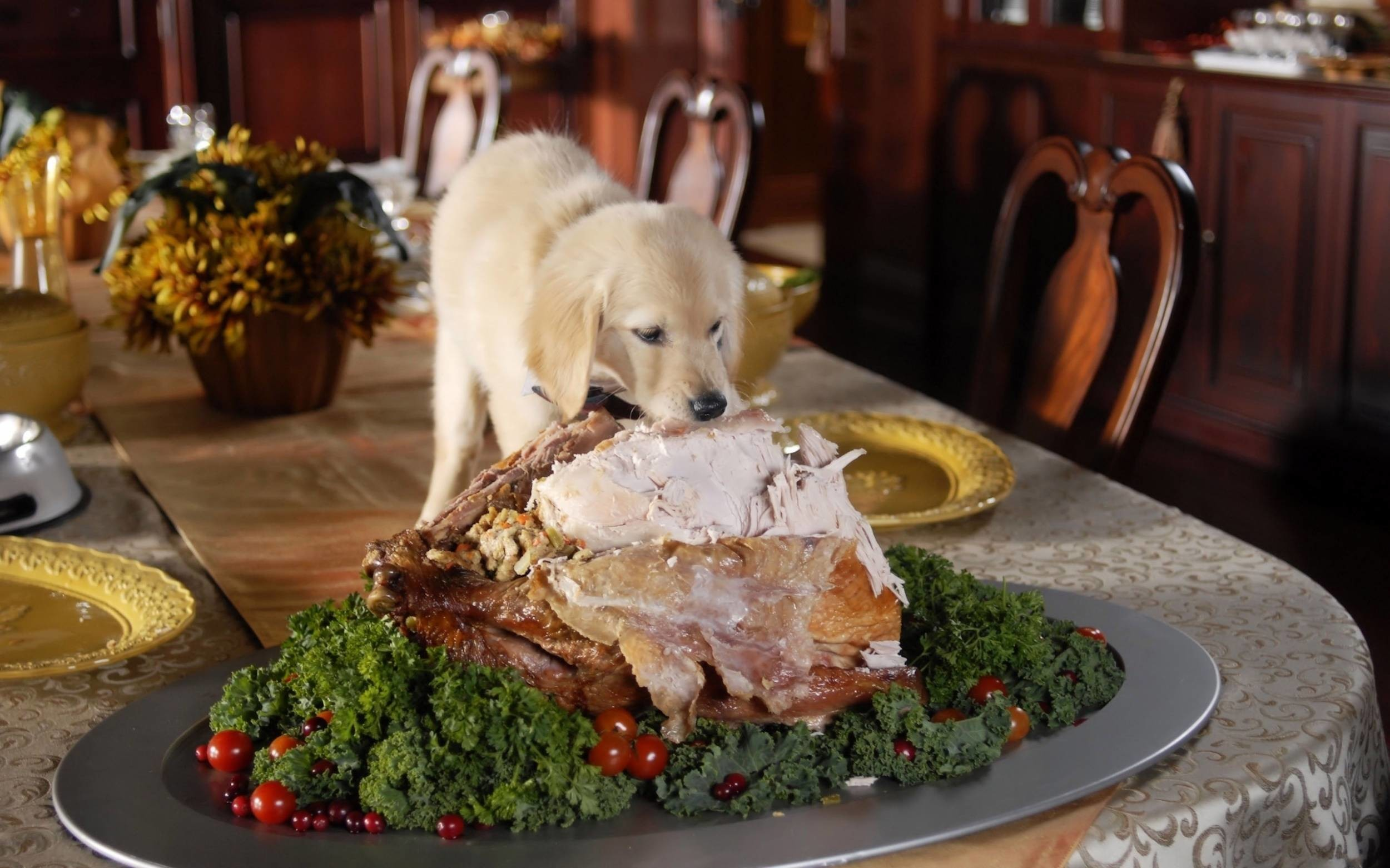 Res: 2500x1562, Thanksgiving – Live HD Thanksgiving Wallpapers, Photos for mobile and  desktop