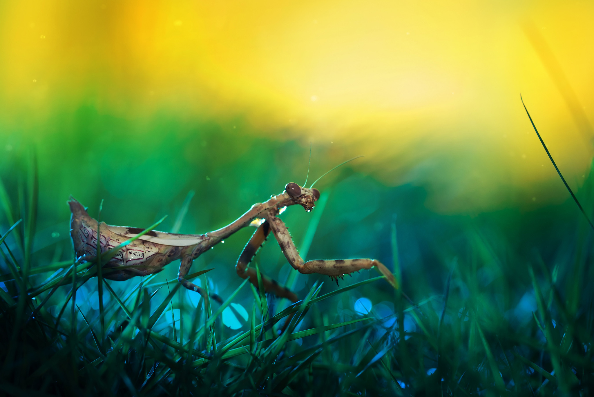 Res: 2048x1369, Best Praying Mantis Wallpaper Desktop Wallpaper