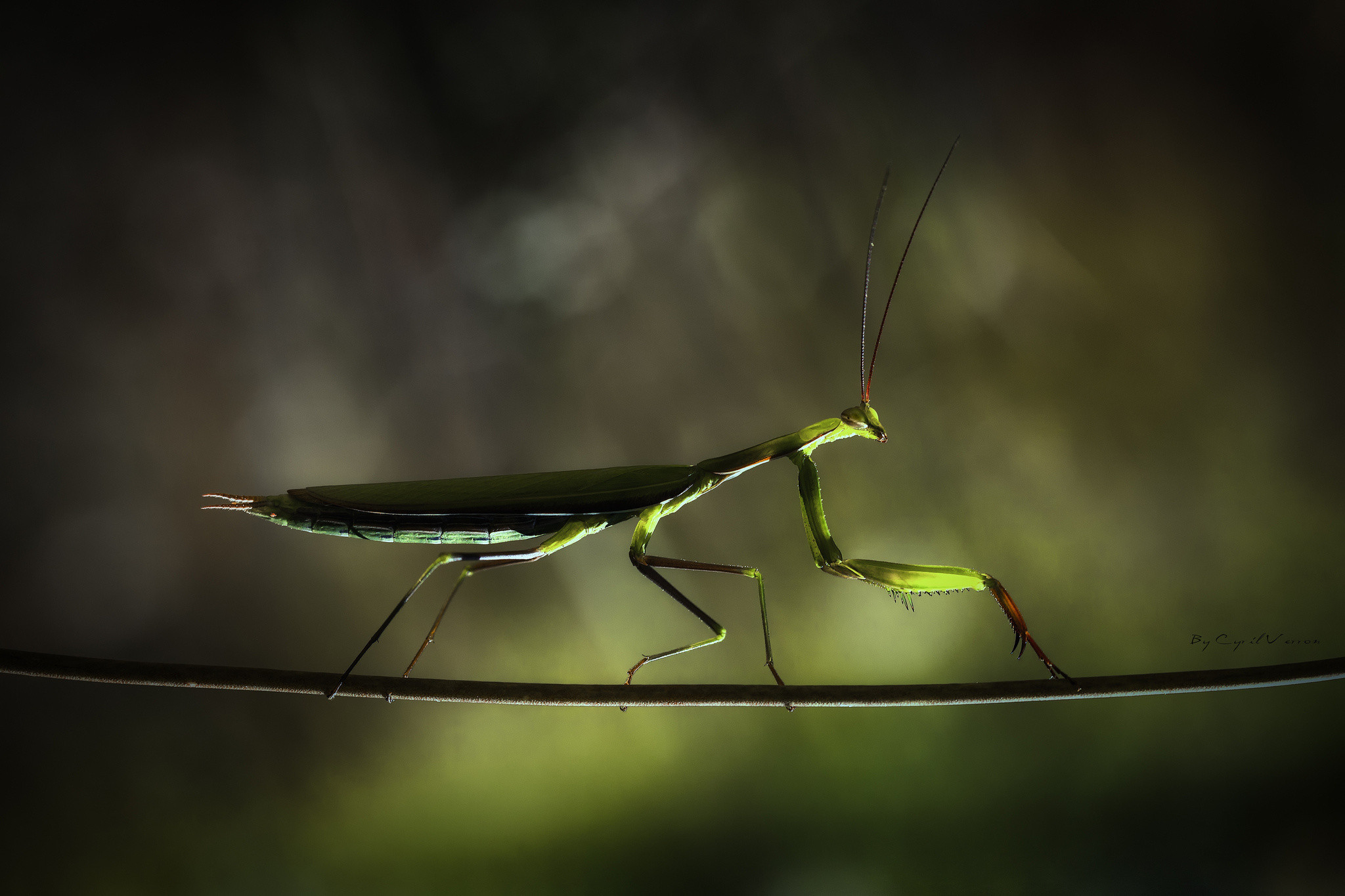 Res: 2048x1365, Praying Mantis Wallpapers 17 - 2048 X 1365