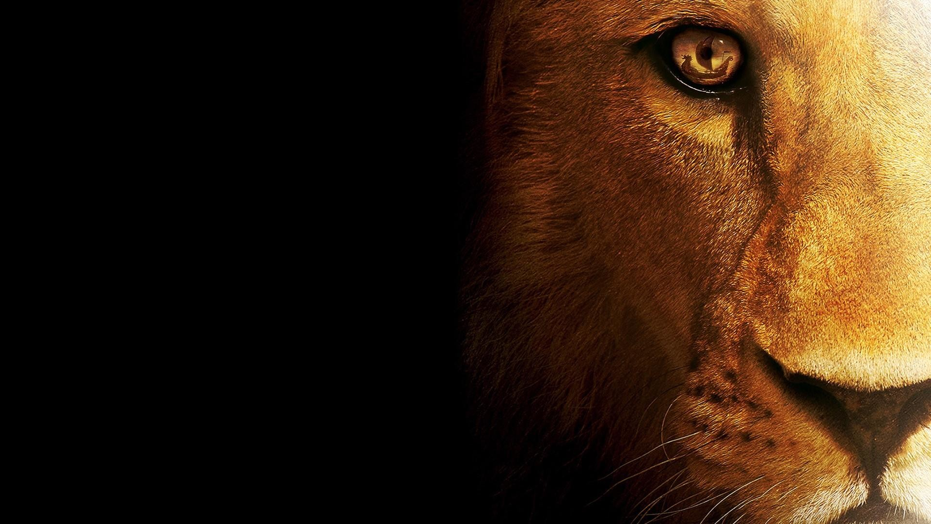 Res: 1920x1080, Lion Face Wallpaper   Wallpaper Studio 10   Tens of thousands HD and  UltraHD wallpapers for Android, Windows and Xbox