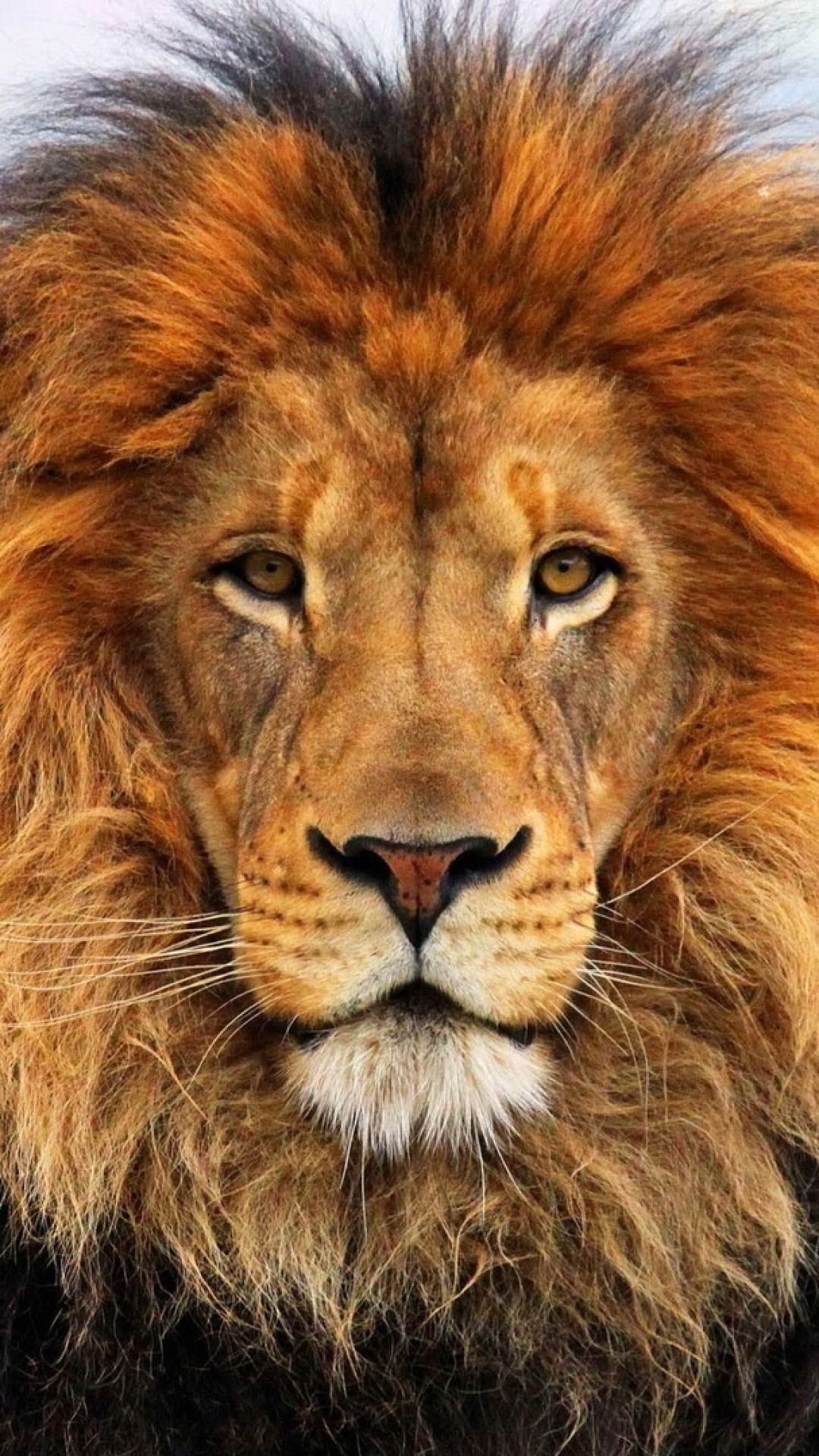 Res: 1080x1920,  Wallpaper face, eyes, lion, fur, mane