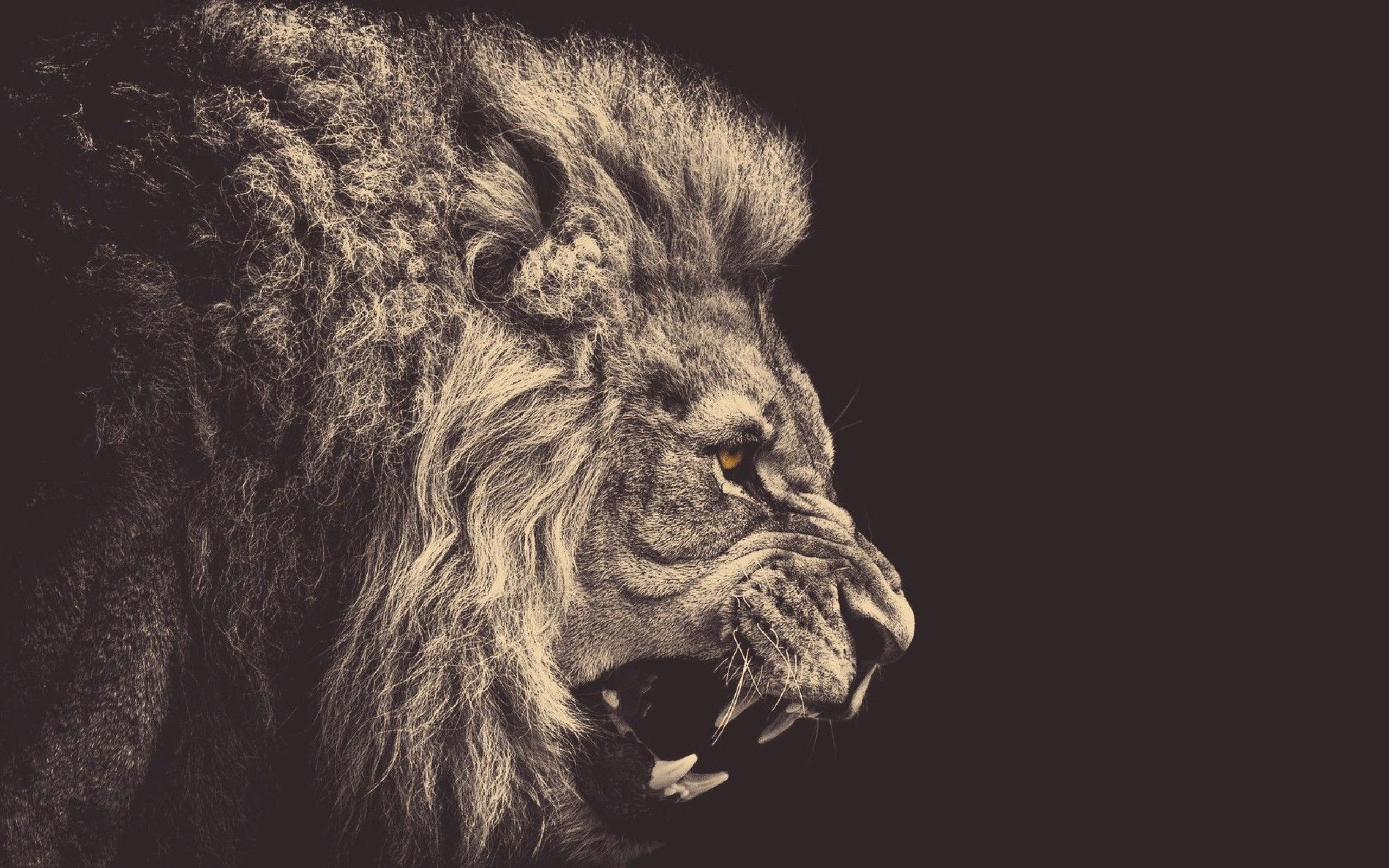 Res: 2560x1600,  Wallpaper drawing, illustration, lion, big cats, head, ART
