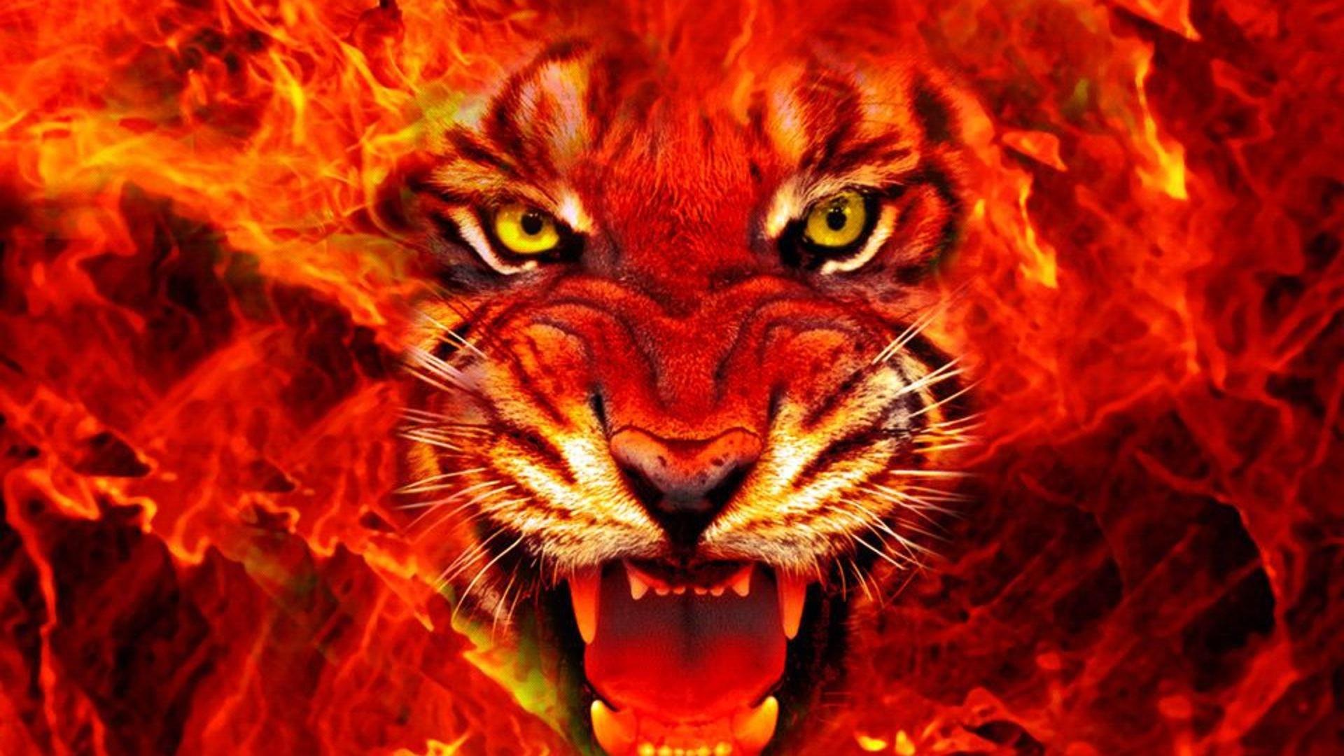 Res: 1920x1080, King of forest (Lion) burning face desktop