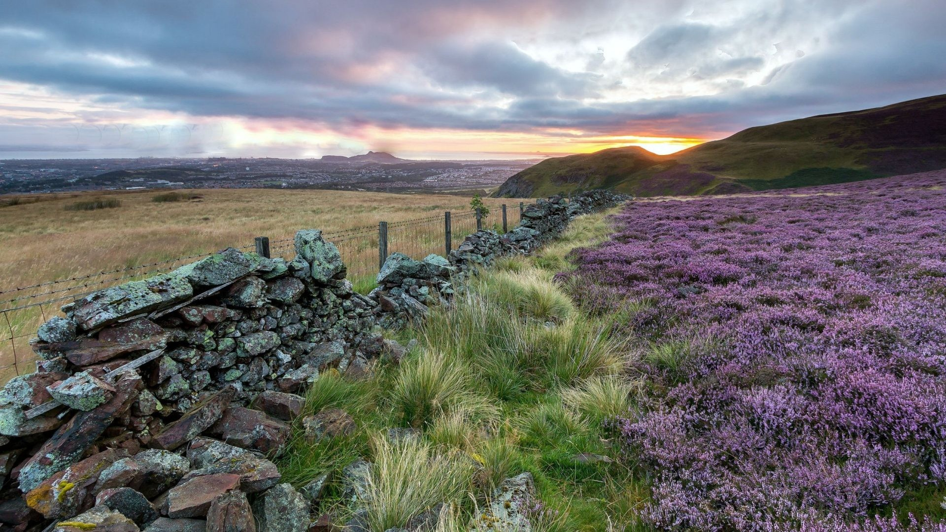 Res: 1920x1080, Heather Tag - Sunset Nature Fence Scotland Scottish Heather Flowers  Wallpaper For Iphone for HD 16