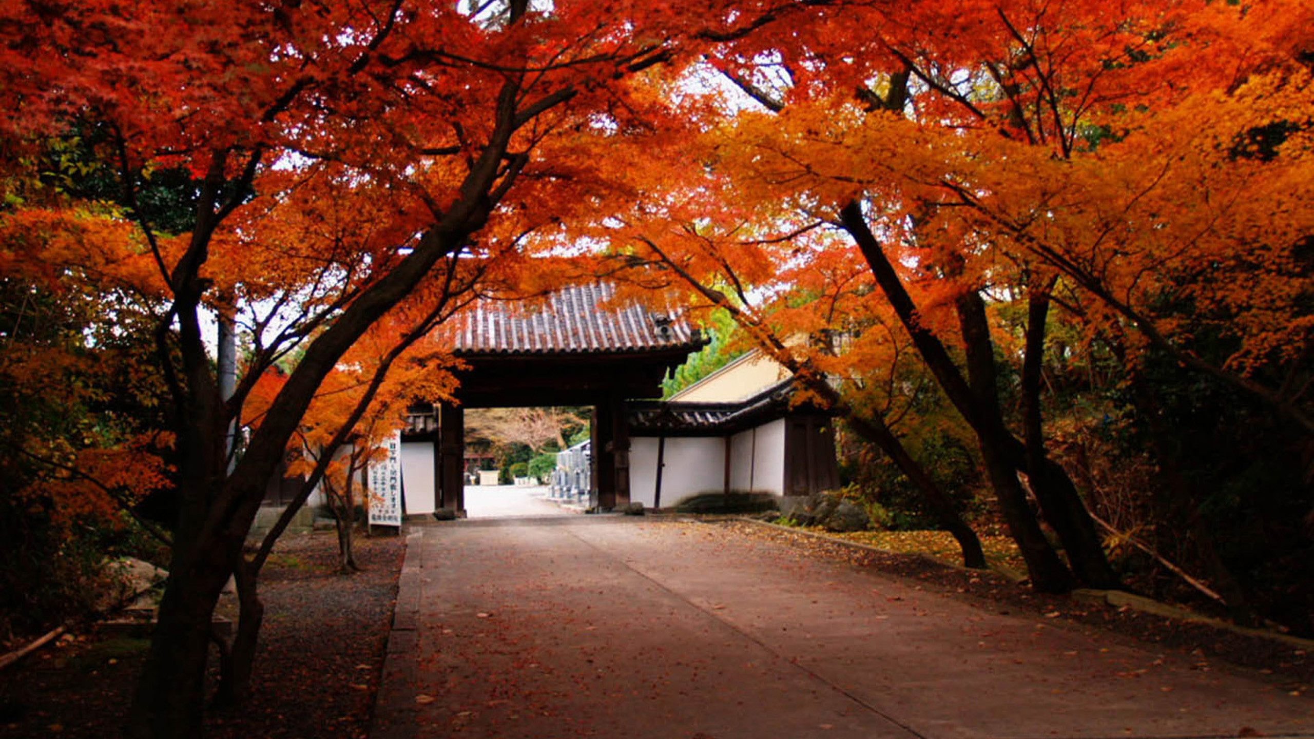 Res: 2560x1440, Japanese autumn scenery Wallpapers HD, HD Desktop Wallpapers