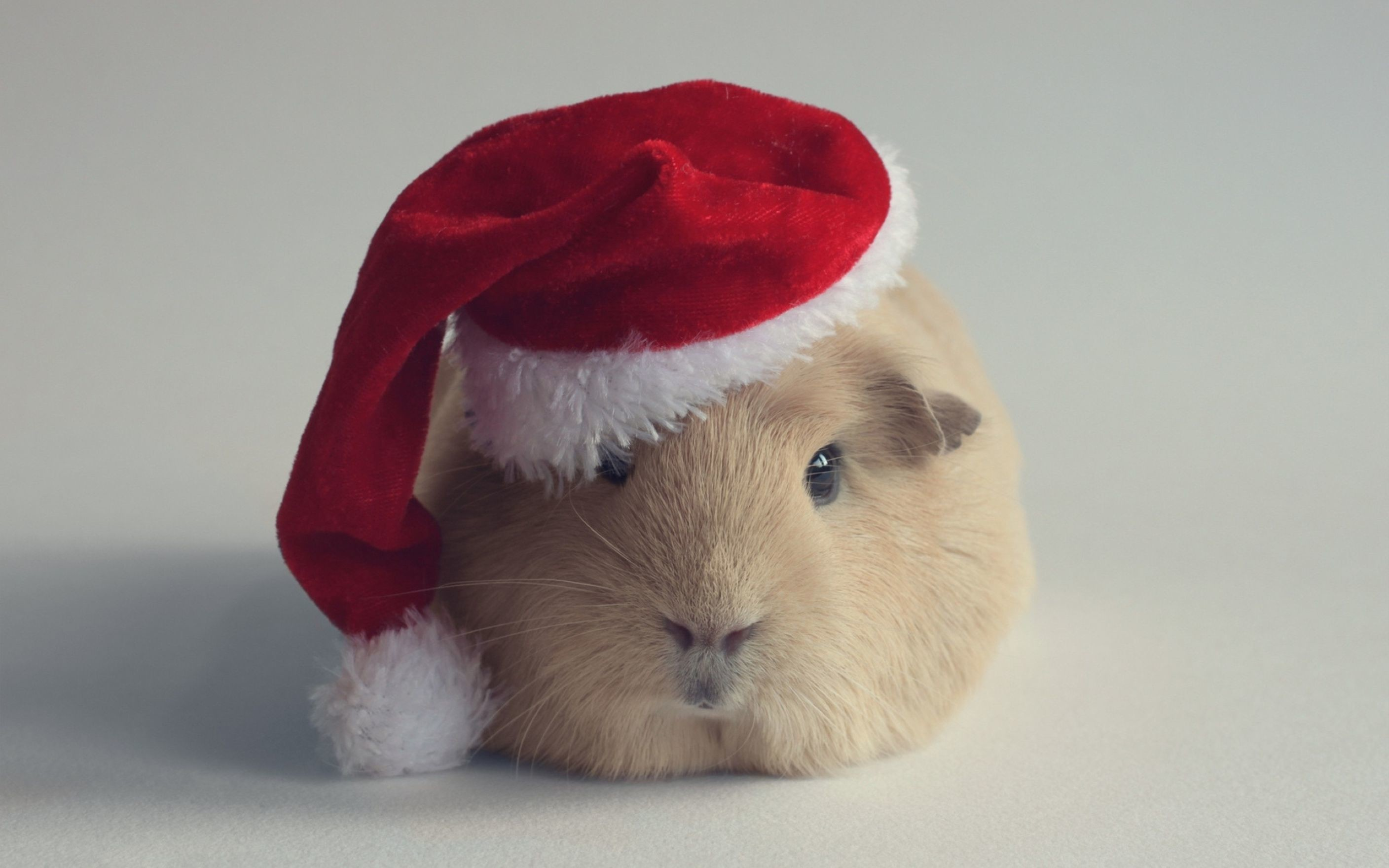 Res: 2816x1760, Hamster Christmas Computer Wallpaper