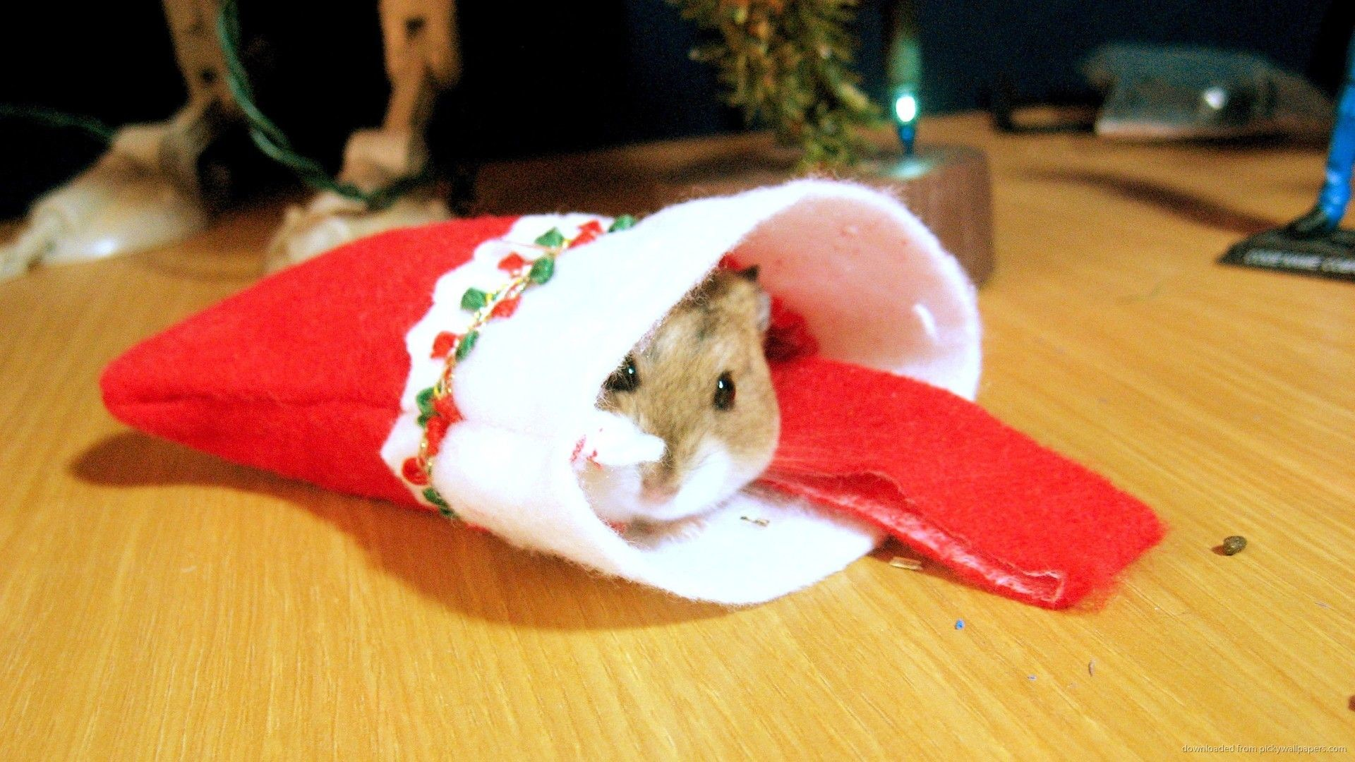 Res: 1920x1080, Cozy little #Christmas hamster.