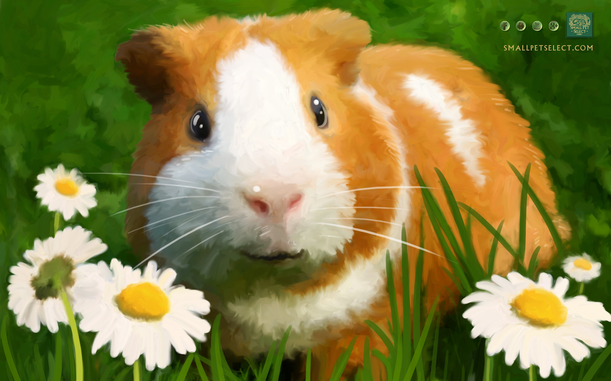 Res: 2560x1600, Guinea Pig Wallpaper Screensaver for your PC MAC Ipad cell phone