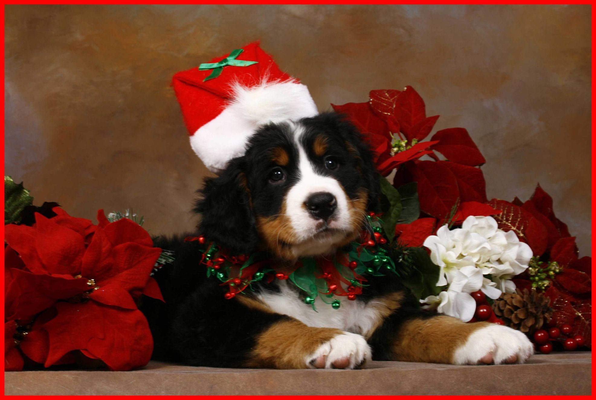 Res: 1973x1325, Fascinating Christmas Puppy Wallpaper Of Cute Hd Desktop Trends And Ideas  Cute Puppy Hd Desktop Wallpaper
