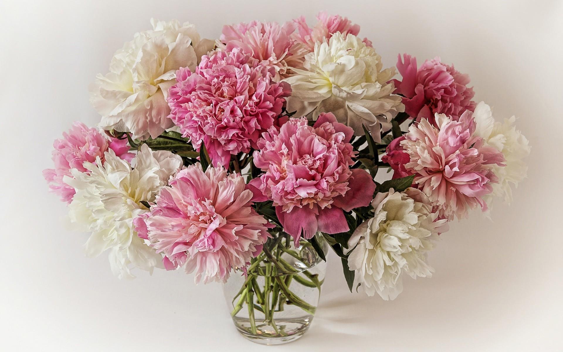 Res: 1920x1200, Download Original Wallpaper Category:flowers ...