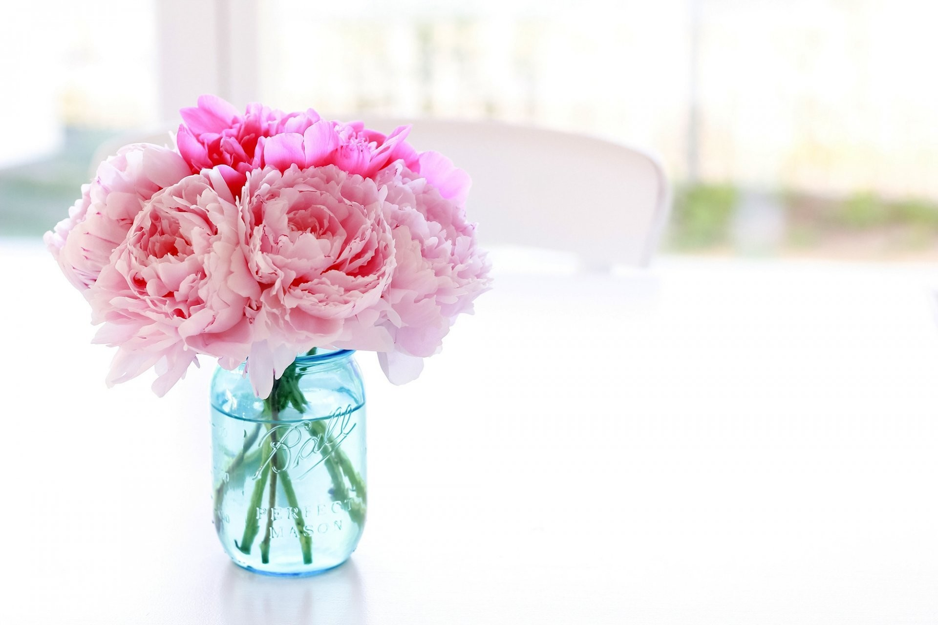 Res: 1920x1280, peonies flower pink of the bank jar vase blue table chair background white