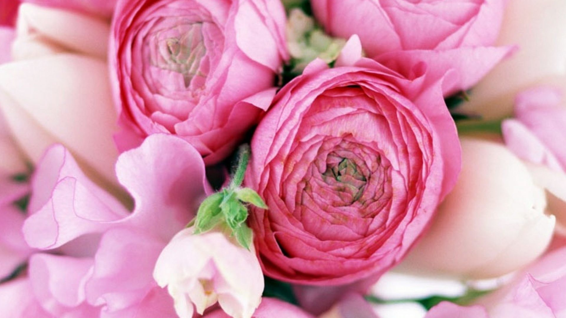 Res: 1920x1080, Pink Peonies Flowers Pretty Peoniies Flower Picture Wallpaper Free