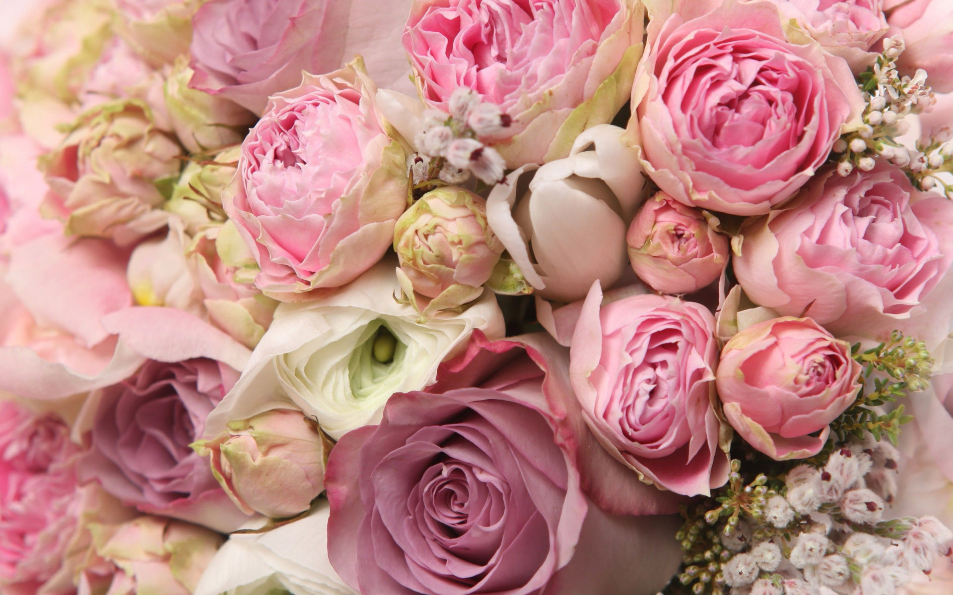 Res: 1920x1200, Peony Wallpapers