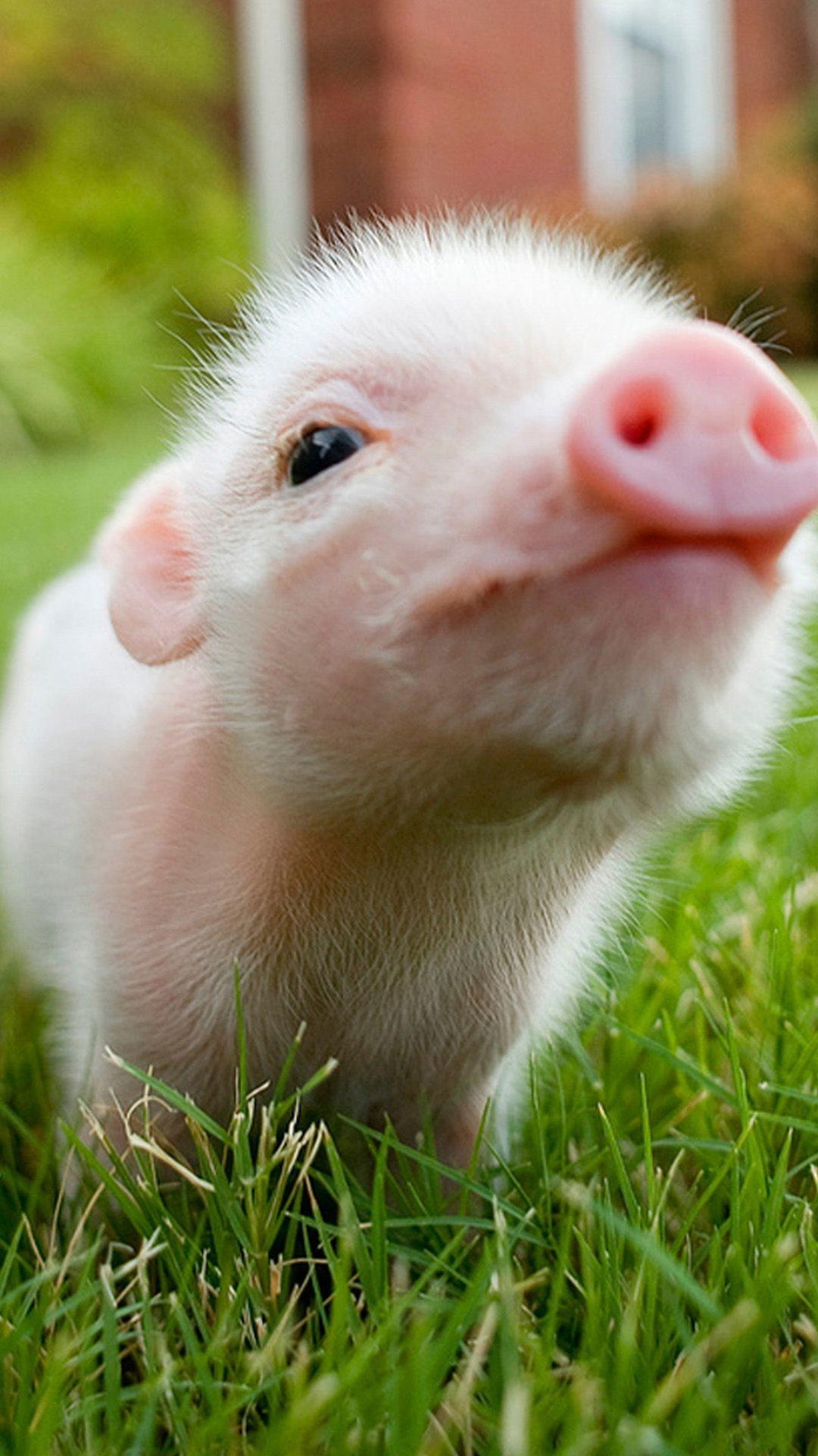 Res: 1080x1920, 17 Best ideas about Pig Wallpaper on Pinterest | Screensaver