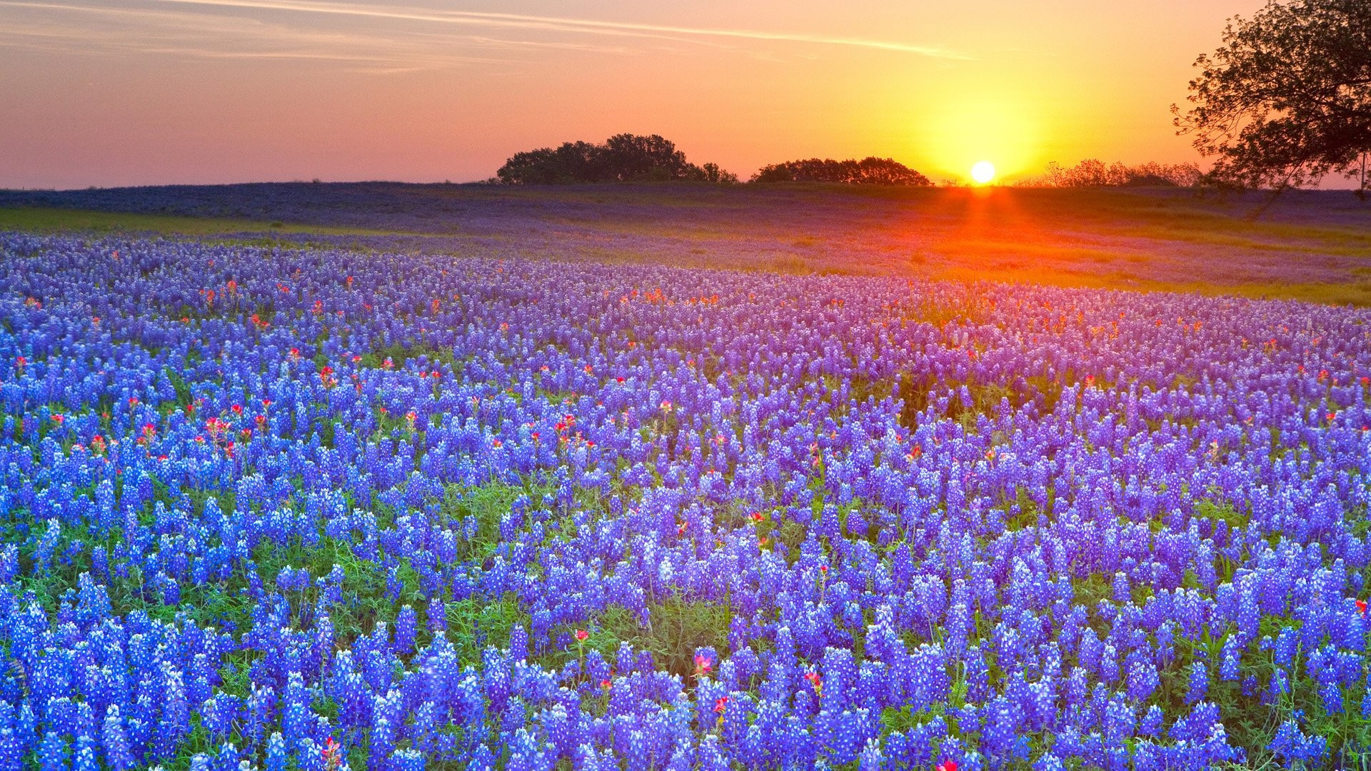 Res: 1920x1080, HD Wallpaper | Background Image ID:299470.  Earth Texas Bluebonnets