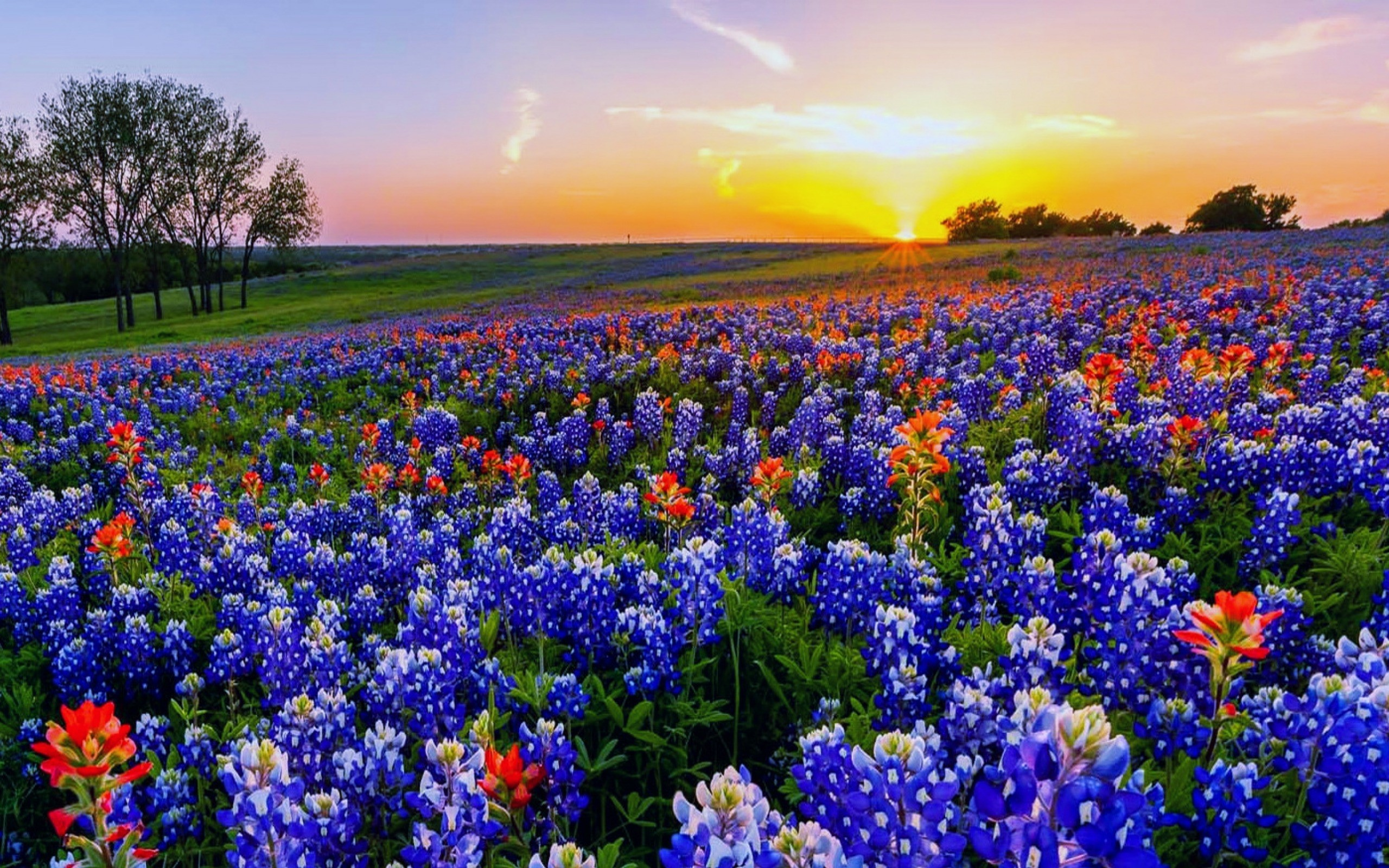 Res: 2560x1600, Texas Bluebonnets Wallpapers 3 - 2560 X 1600
