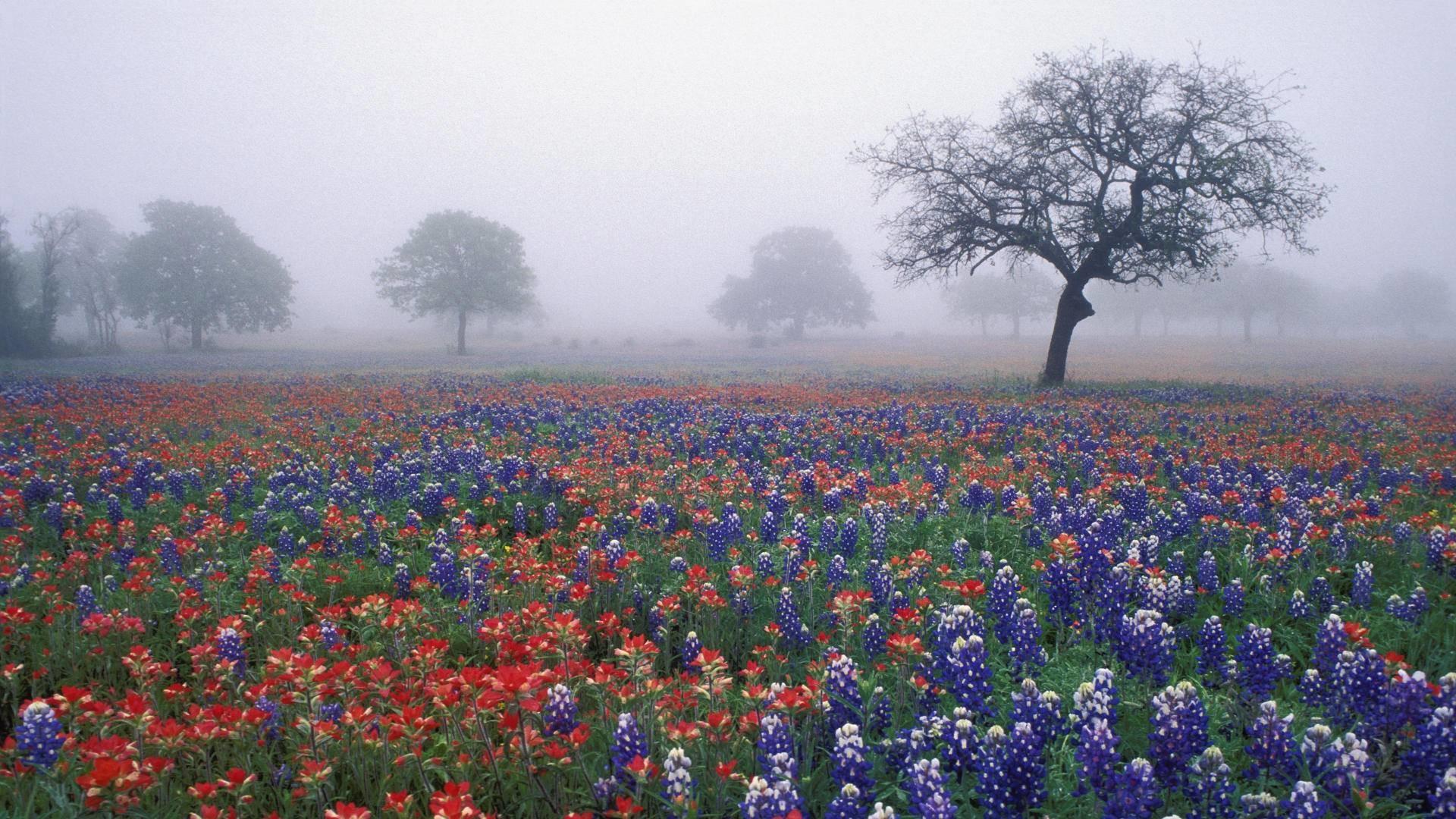 Res: 1920x1080, Pix For > Texas Bluebonnets Wallpaper