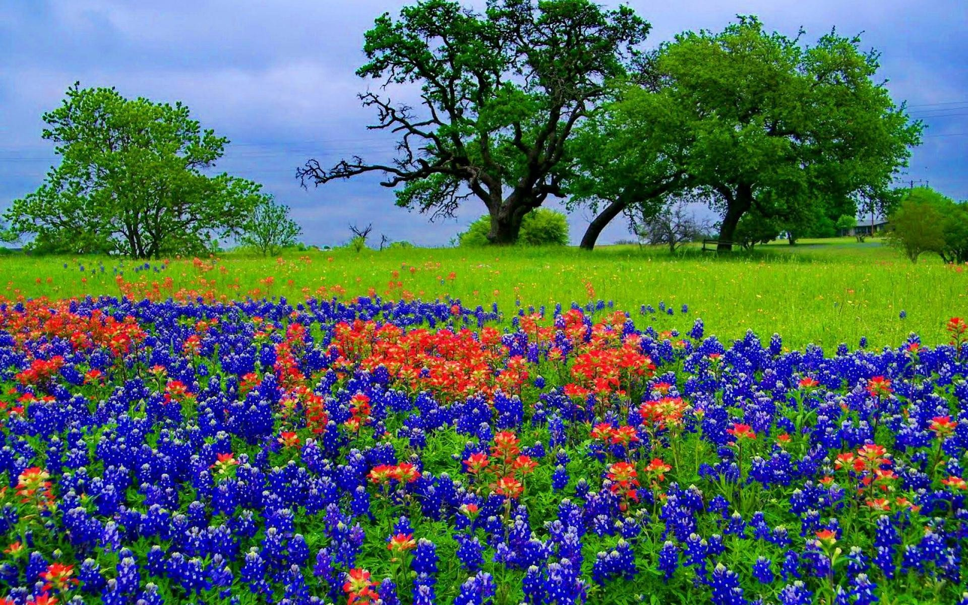 Res: 1920x1200, Texas Bluebonnets Wallpapers 7 - 1920 X 1200