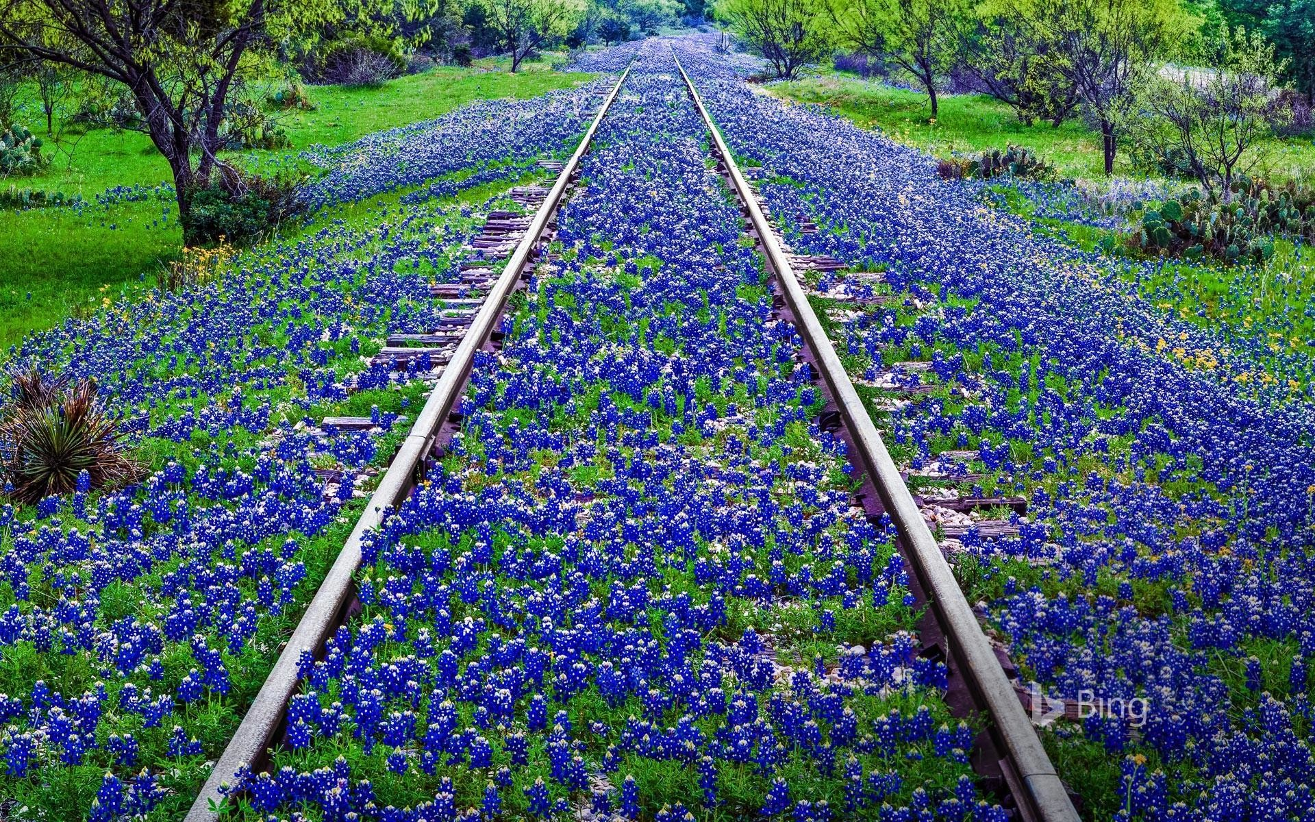 Res: 1920x1200, Texas Bluebonnets Wallpapers 18 - 1920 X 1200