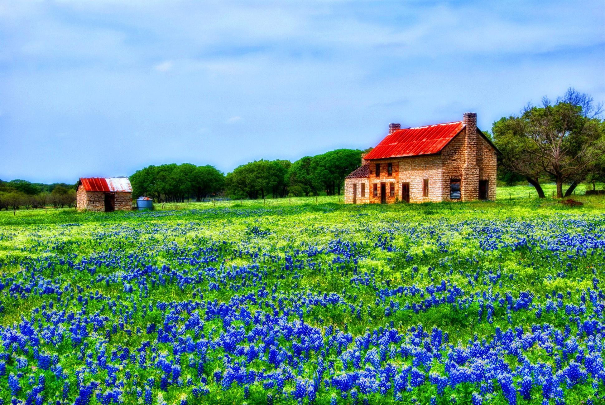 Res: 1941x1298, Hill Country Bluebonnets