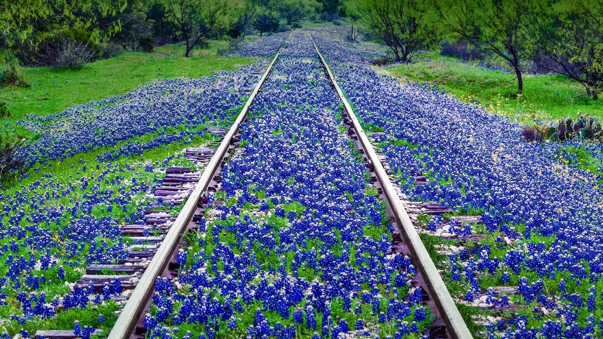 Res: 1920x1080, Texas Bluebonnets Wallpapers 24 - 1920 X 1080