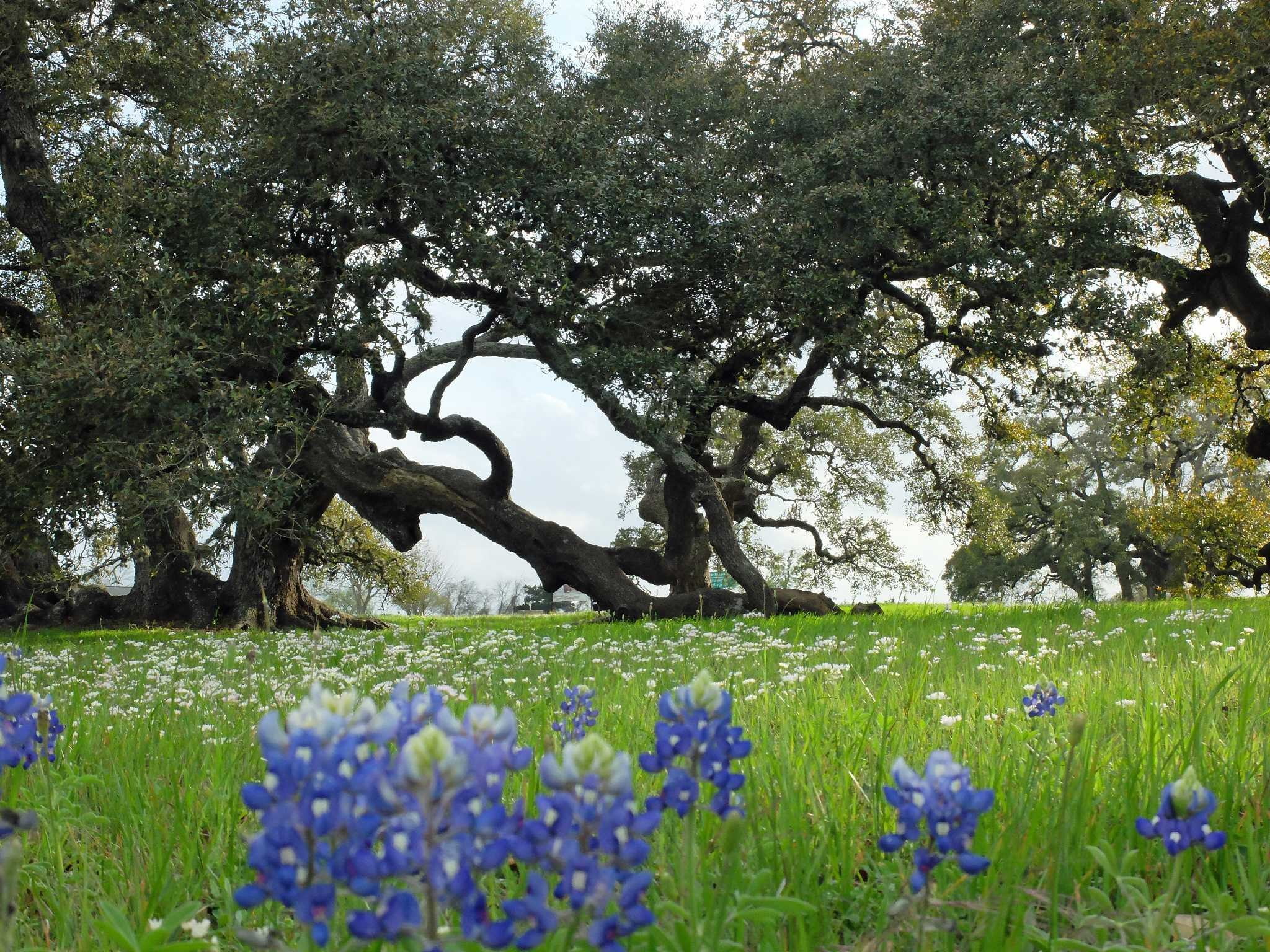 Res: 2048x1536, Thanks to a warm winter, flowering plants are blooming ahead of schedule -  Houston Chronicle