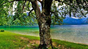 Tree Scene wallpapers