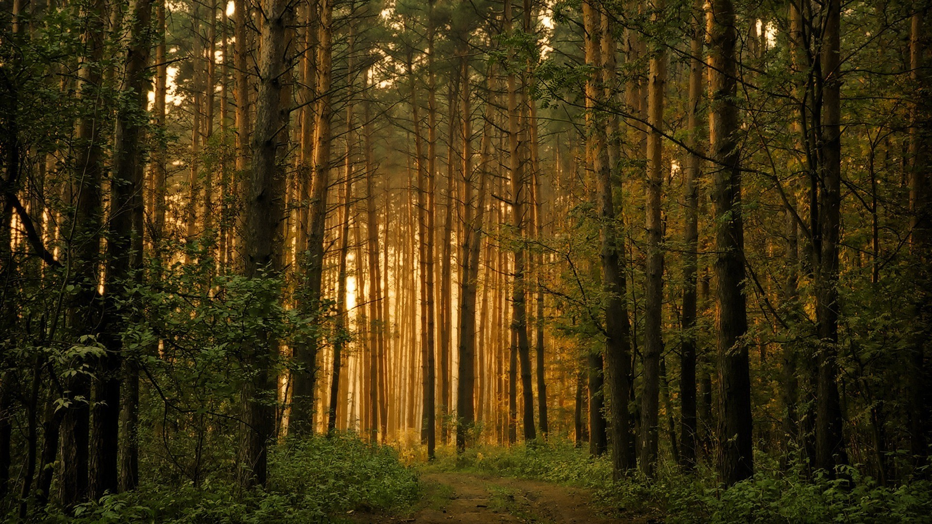 Res: 1920x1080, Forest Trees Scene Sun Dual Wallpaper -