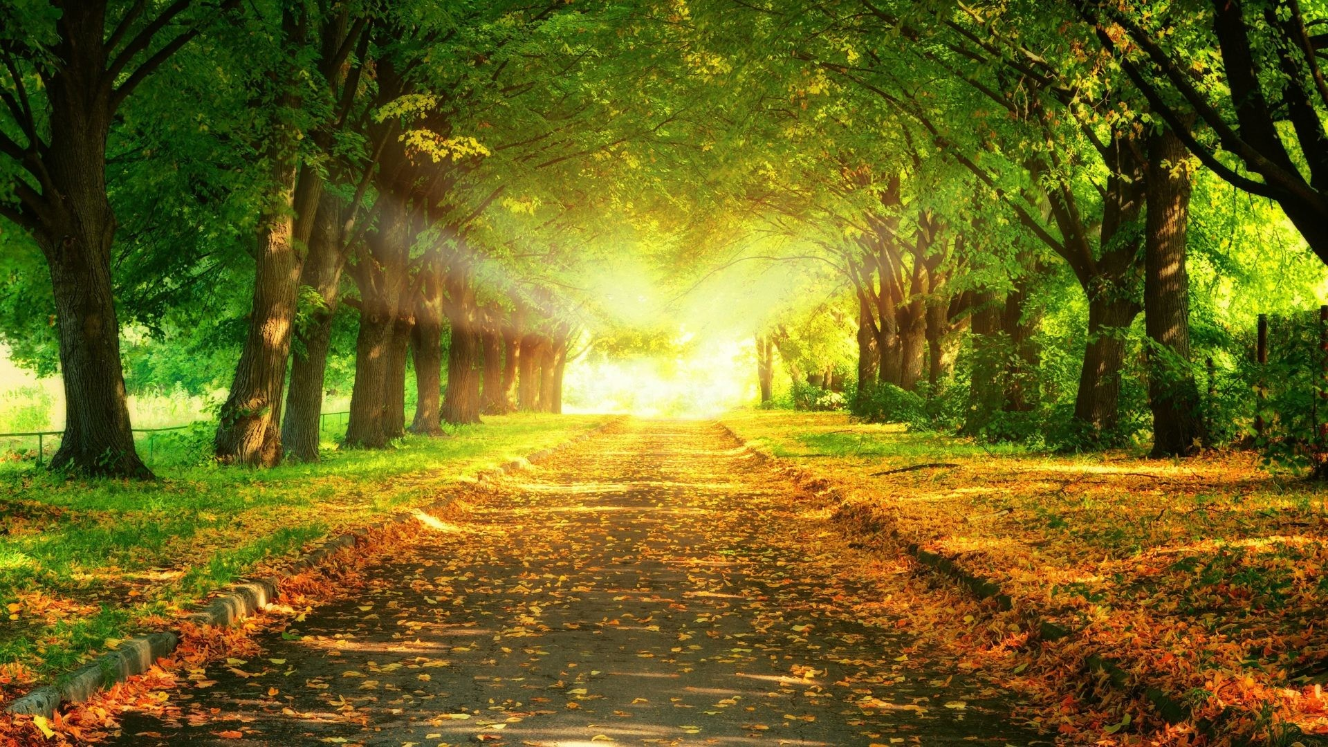 Res: 1920x1080, Wallpaper Forest Scene High Quality Full Hd Path Tag Landscape Fall Tree  Trail Autumn Of Androids