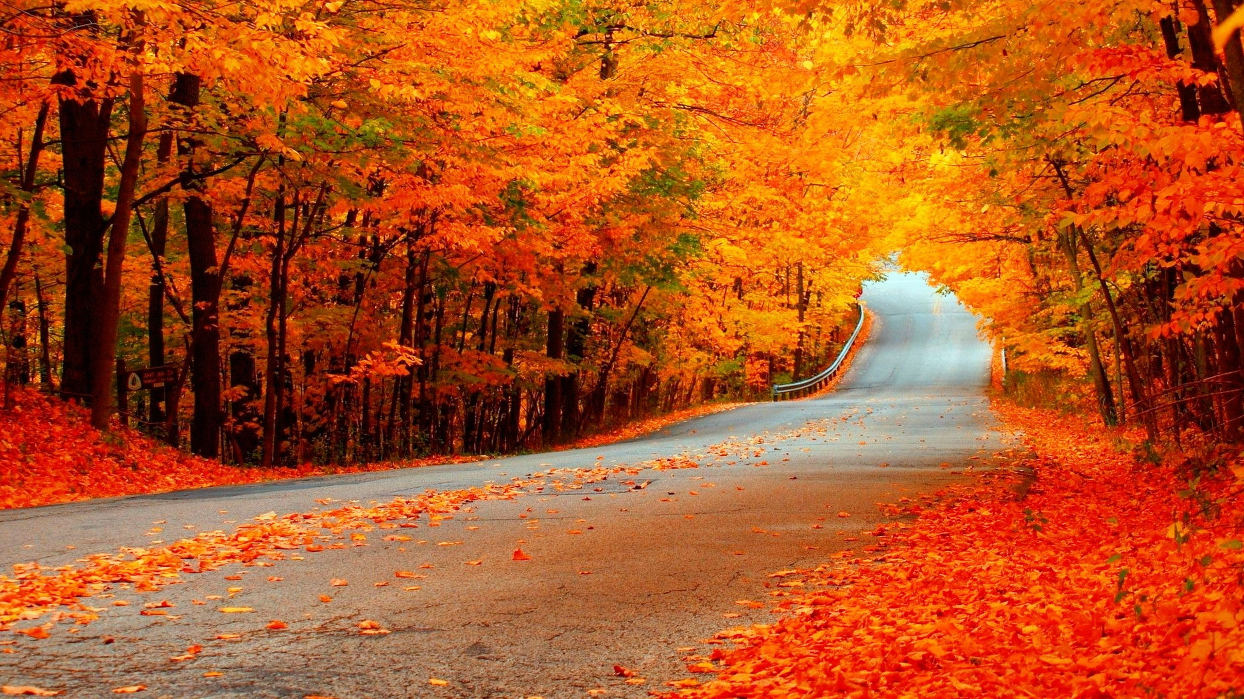 Res: 2560x1440, Man Made - Road Fall Man Made Foliage Orange Tree Forest Wallpaper