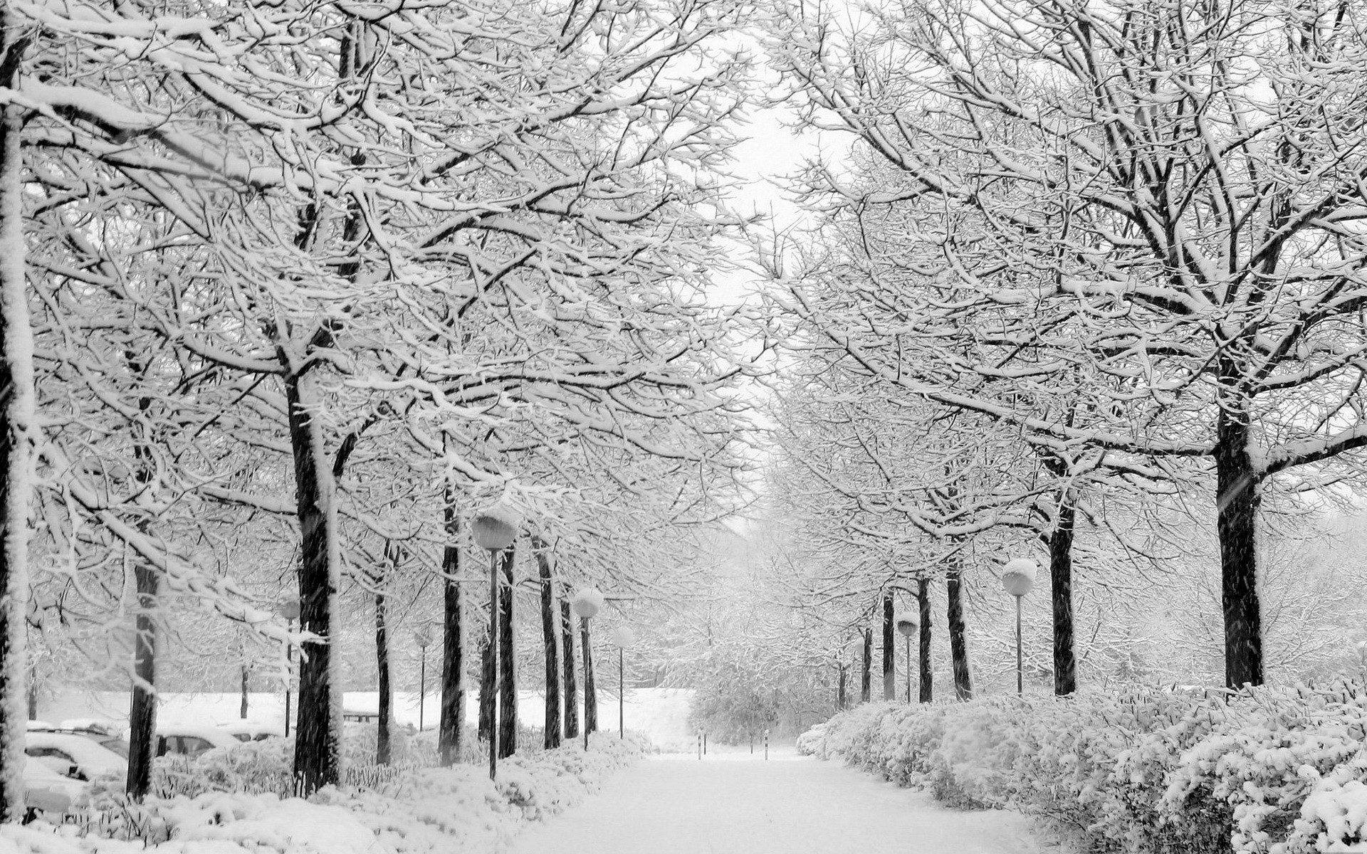 Res: 1920x1200, Winter-Nature-Scenes-Wallpapers-Gallery-(68-Plus)-PIC-WPW508921