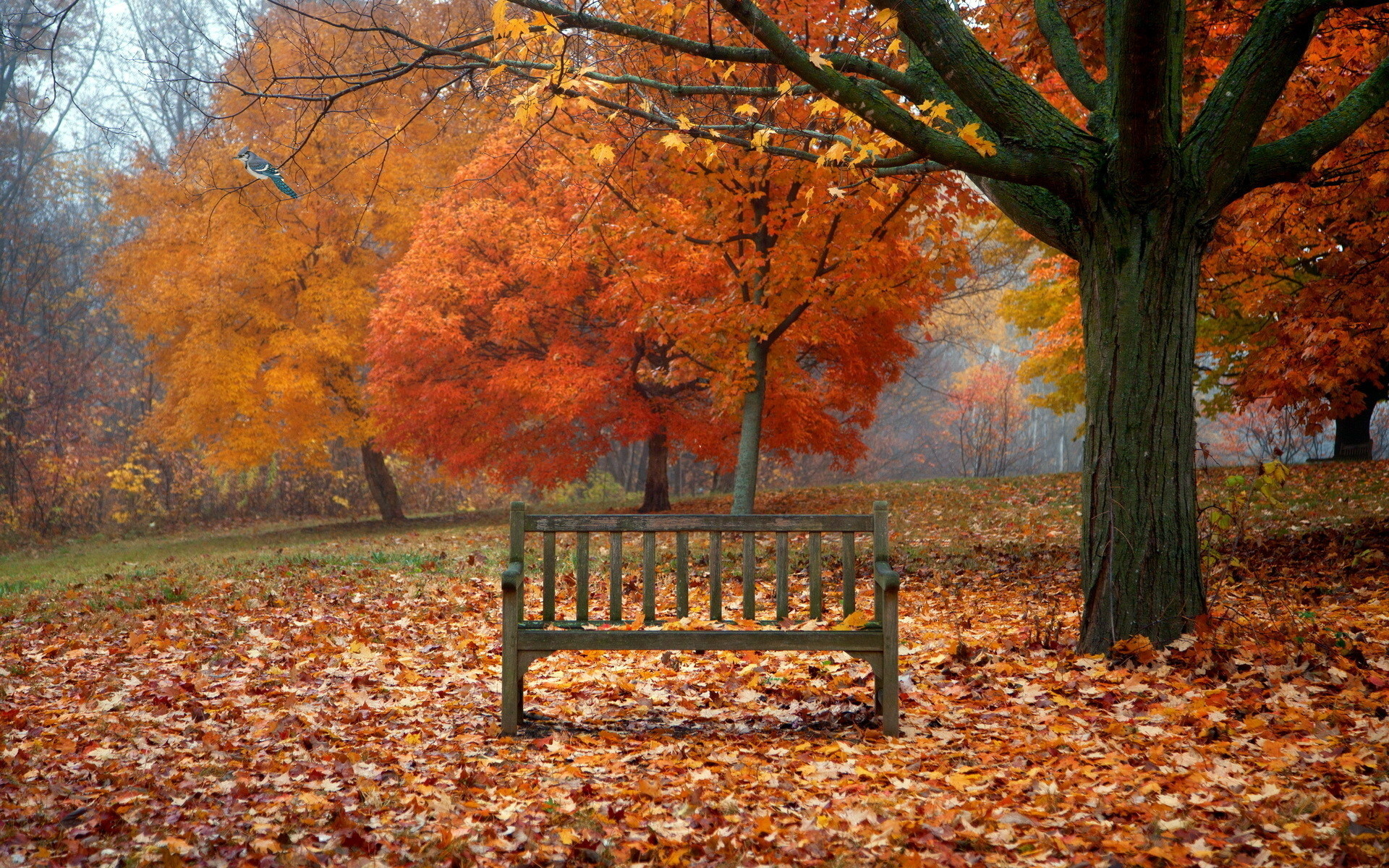 Res: 1920x1200, scenes of autumn