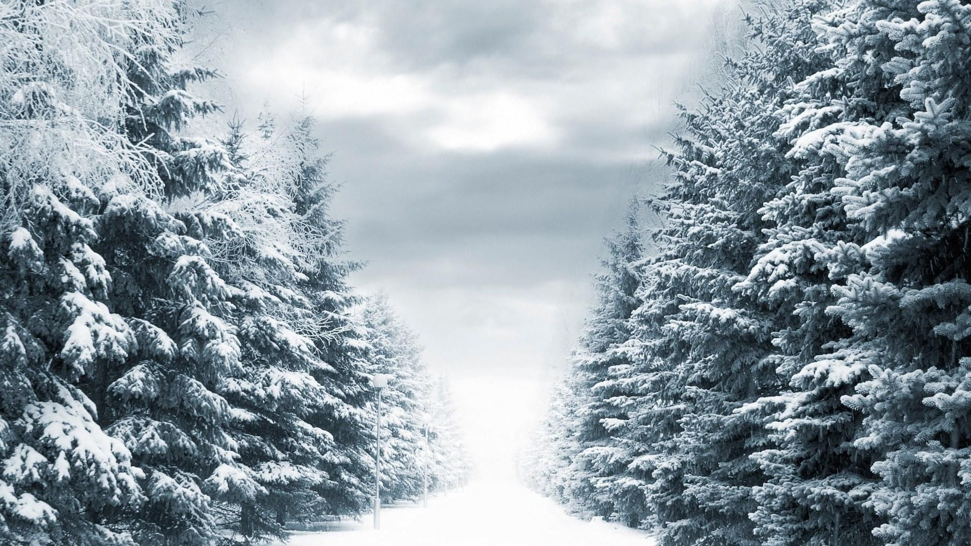 Res: 1920x1080, Winter Scene wallpaper pine trees covered in snow