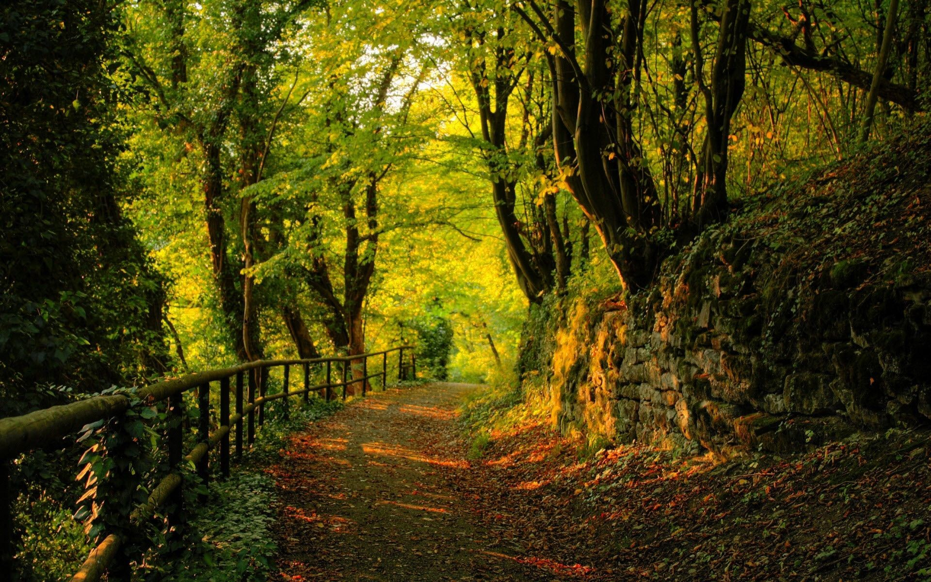 Res: 1920x1200, real life beautiful nature scenes | Home - Desktop wallpapers & photos -  Forest - Walking path - 1920 x .