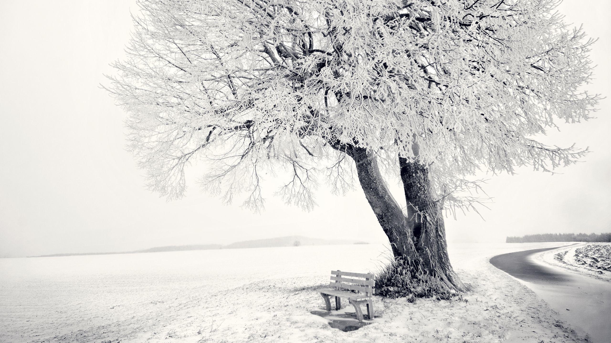 Res: 2560x1440, Snow Winter Scene Wallpaper |  | ID:22858