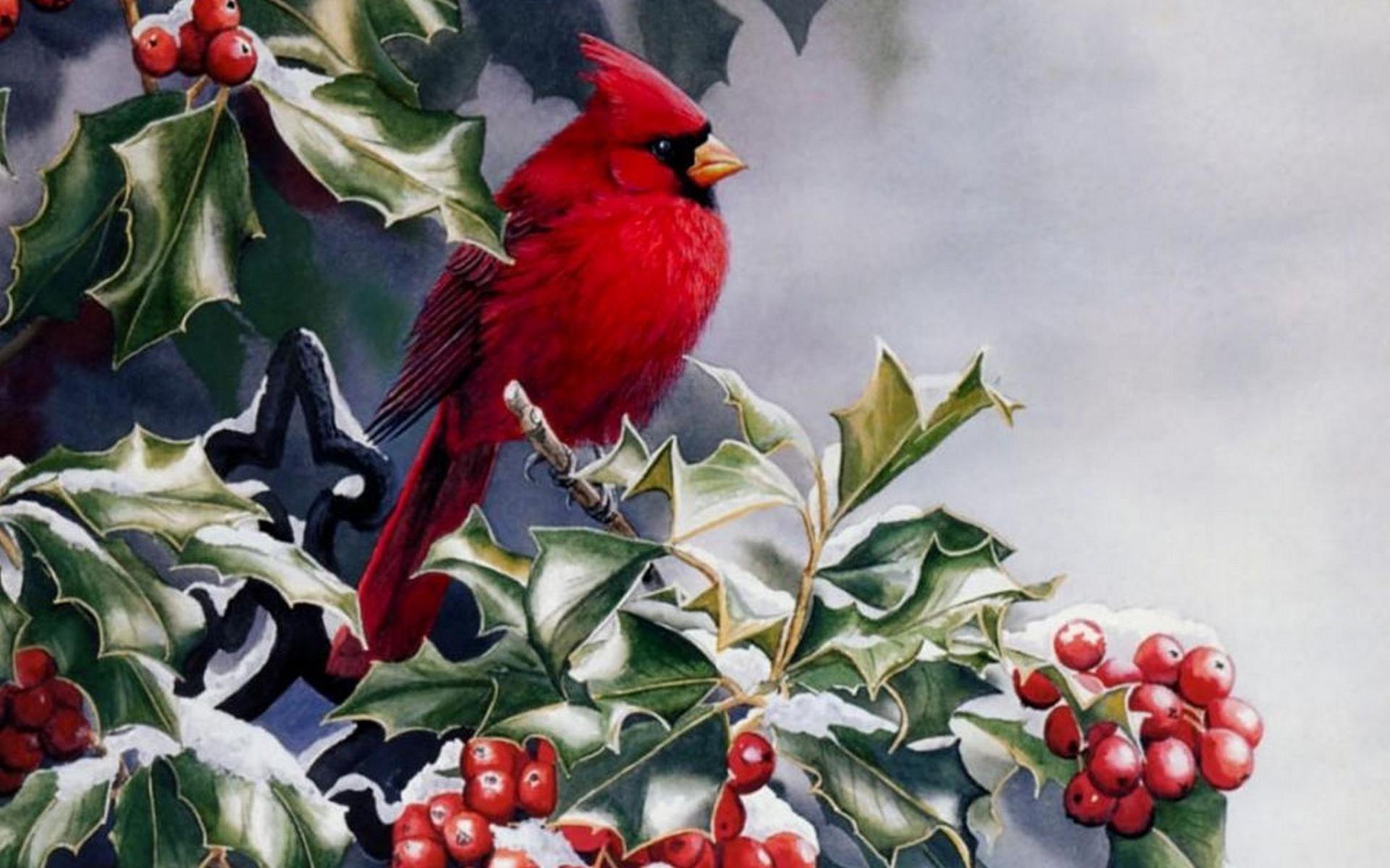 Res: 1920x1200, Cardinal Wallpaper 43