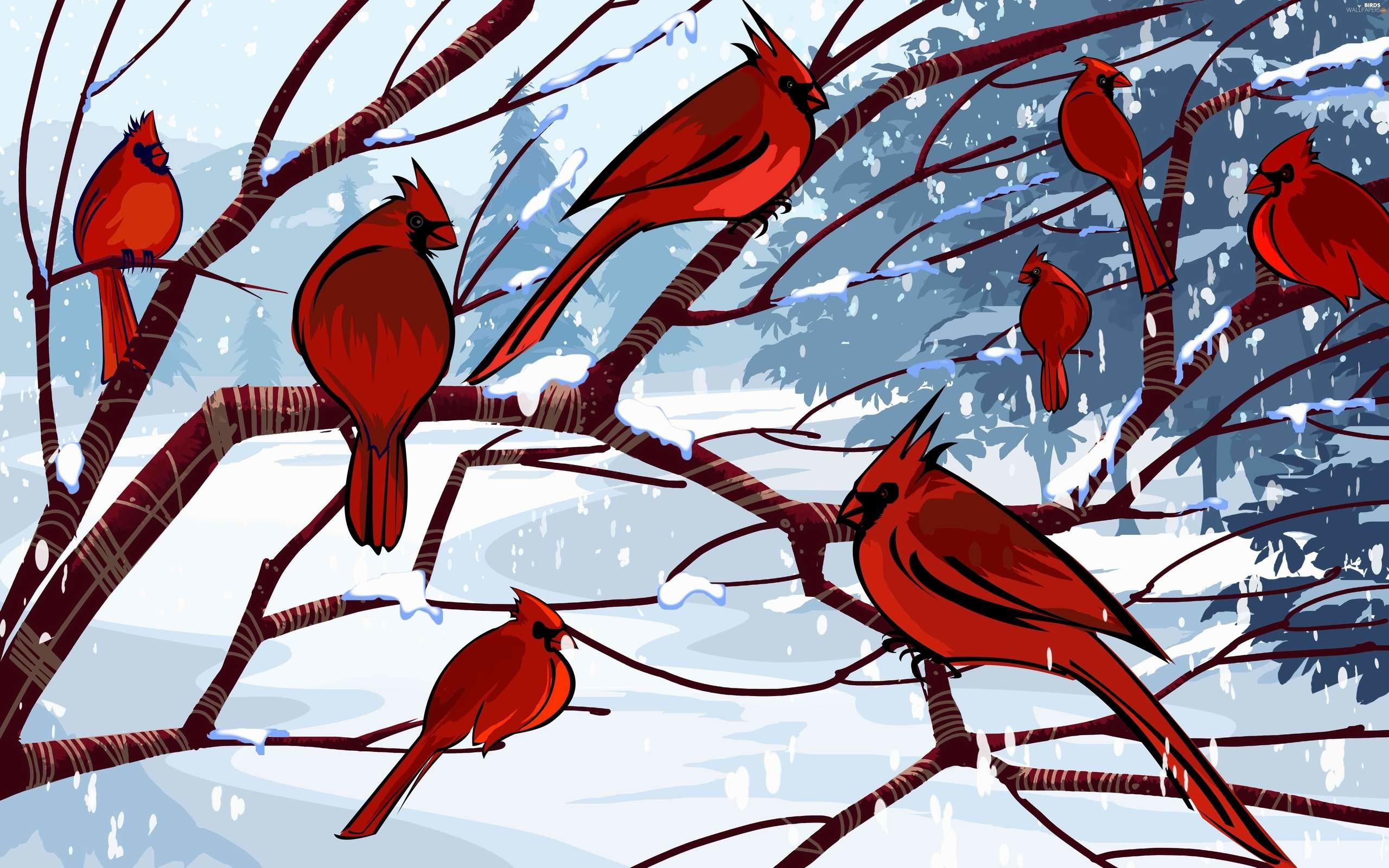 Res: 2560x1600, cardinal birds wallpaper