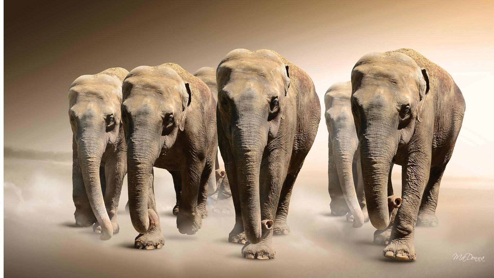 Res: 1920x1080, Elephants Dust
