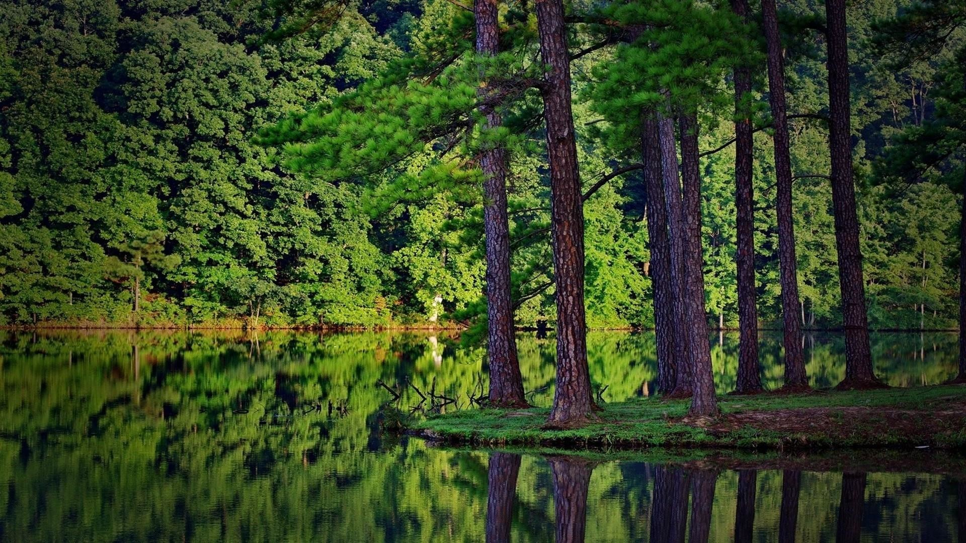 Res: 1920x1080, Green Pine Forest At The Lakeside Wallpaper | Wallpaper Studio 10 | Tens of  thousands HD and UltraHD wallpapers for Android, Windows and Xbox